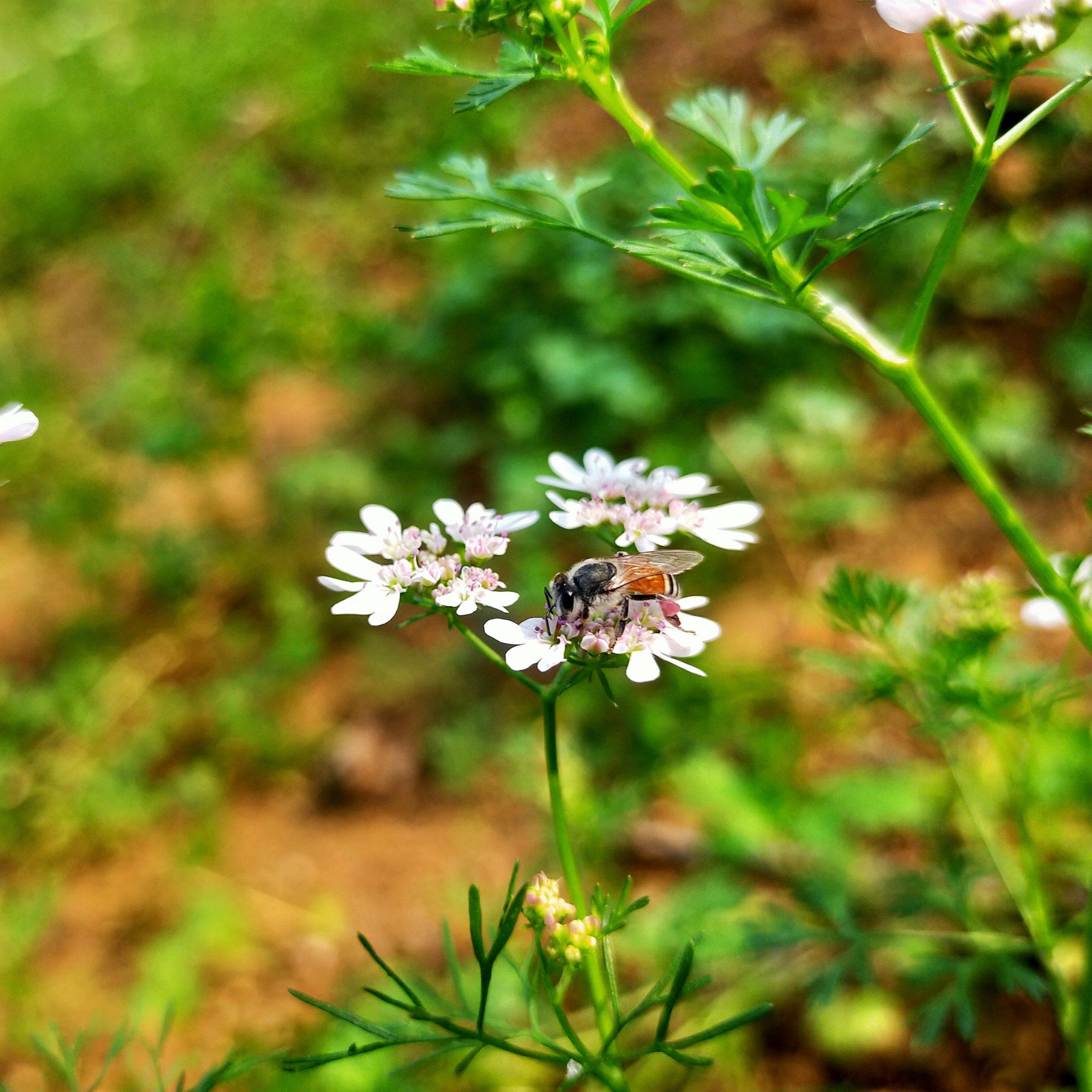 Honey bee on the flower