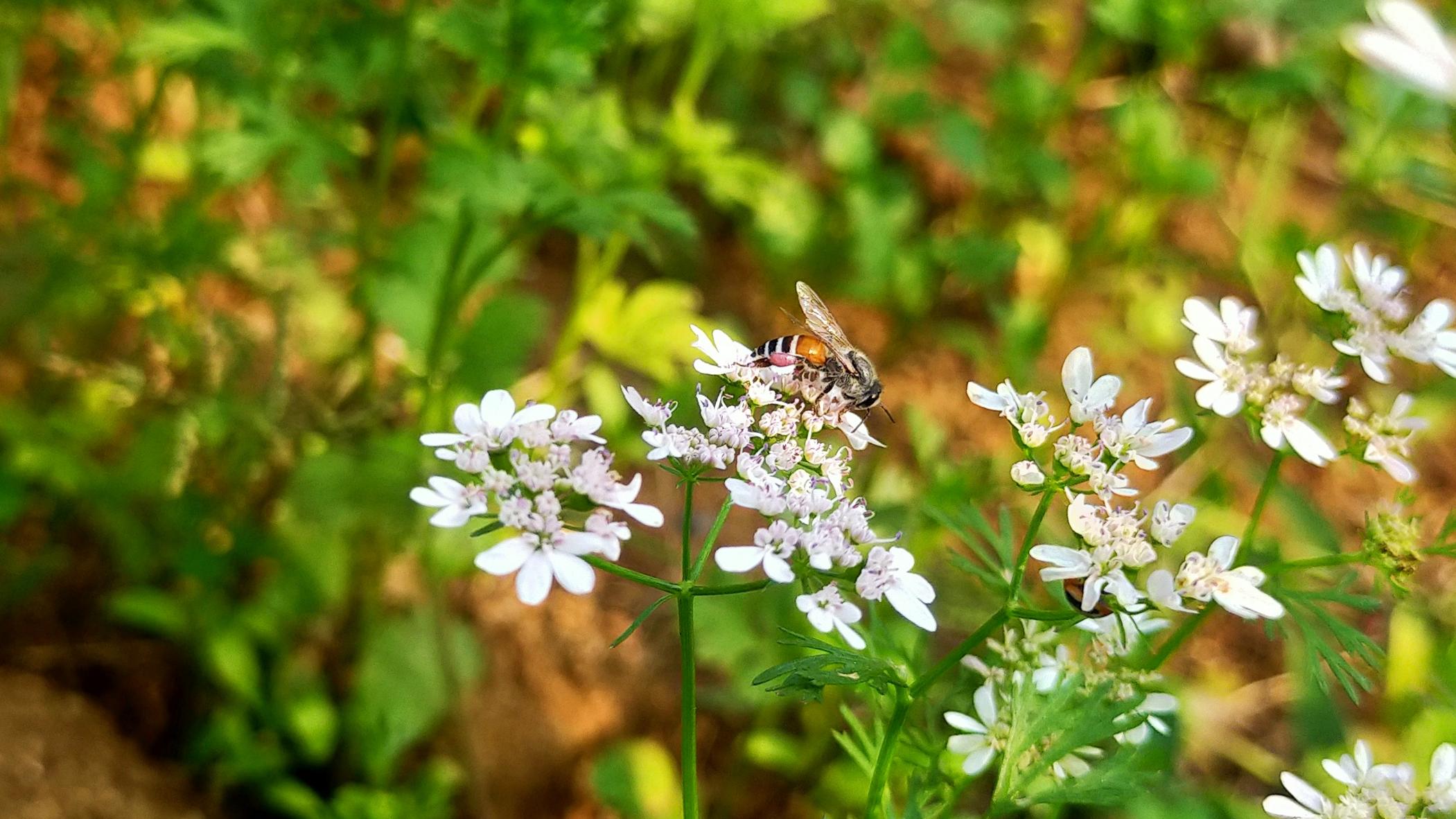 A honeybee on flower