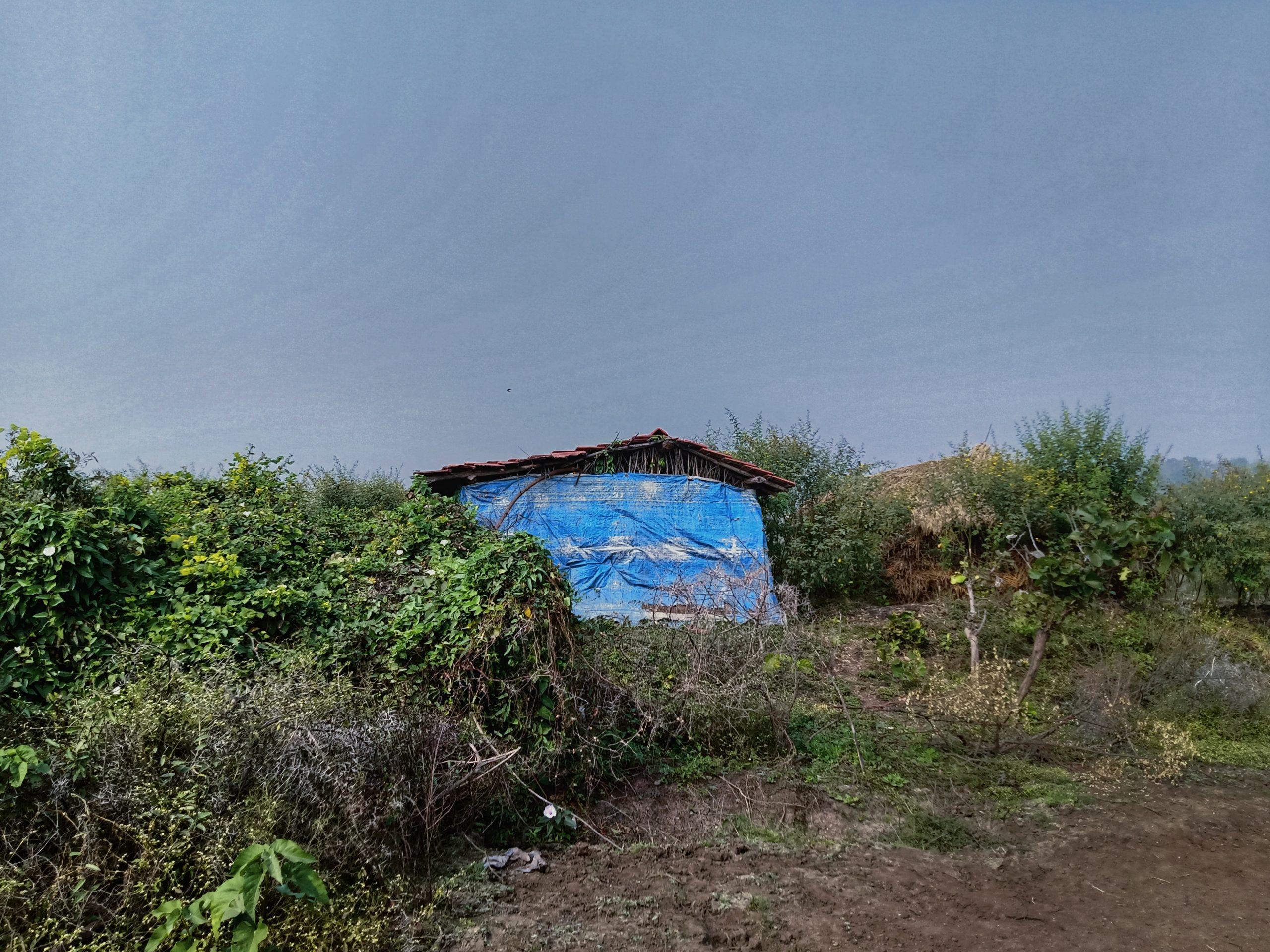 A hut in a jungle