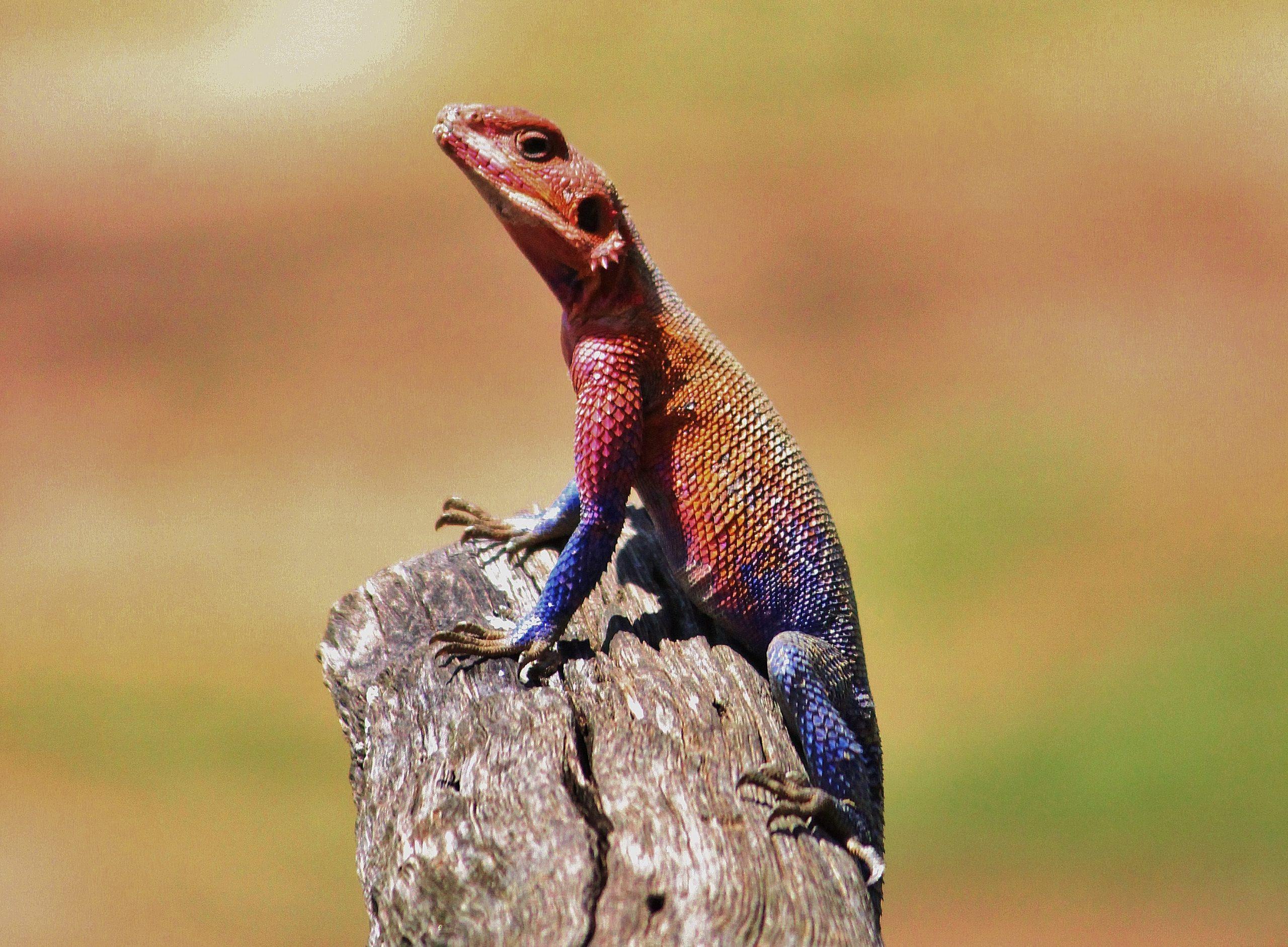 A lizard on a wood