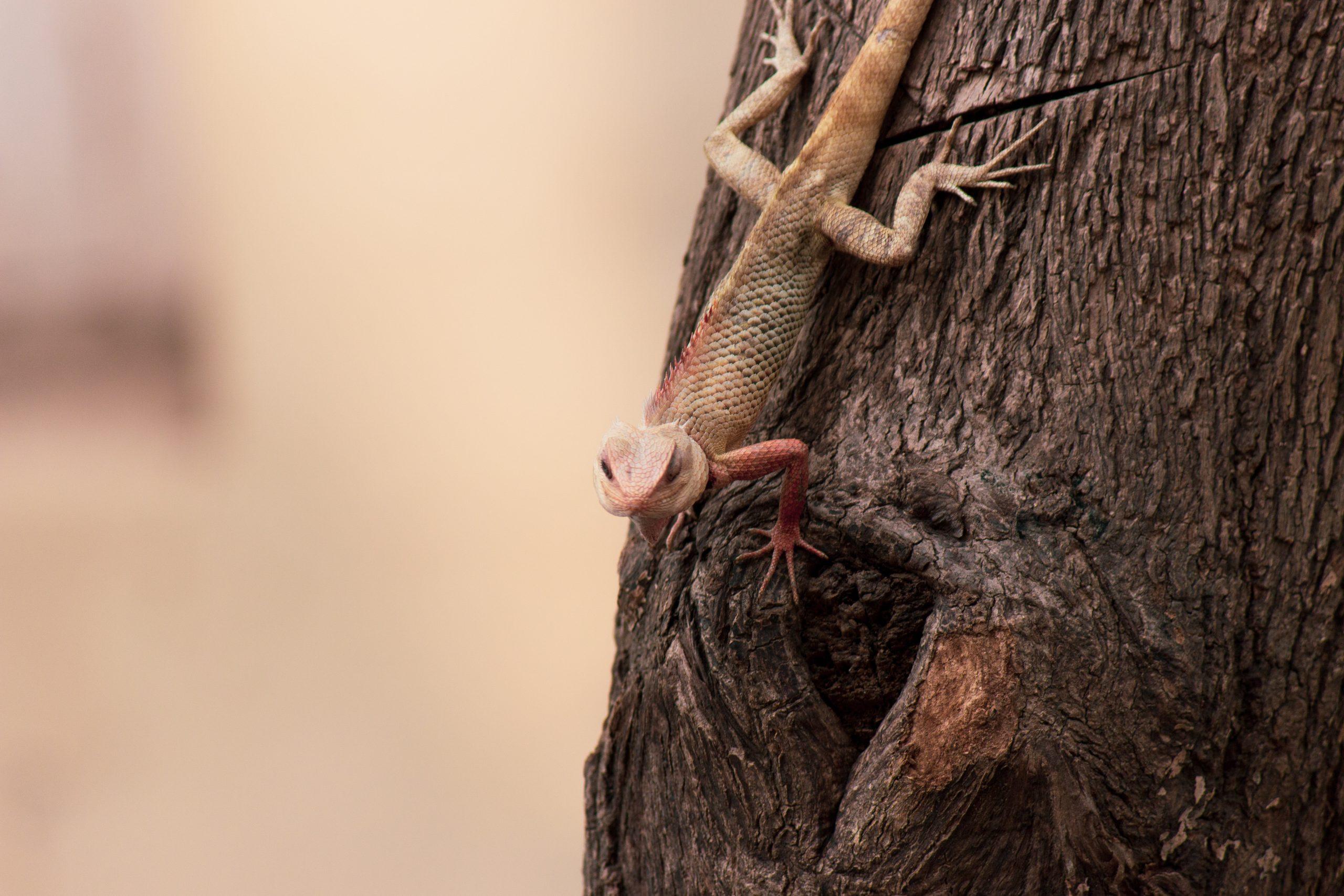 A lizard on tree trunk