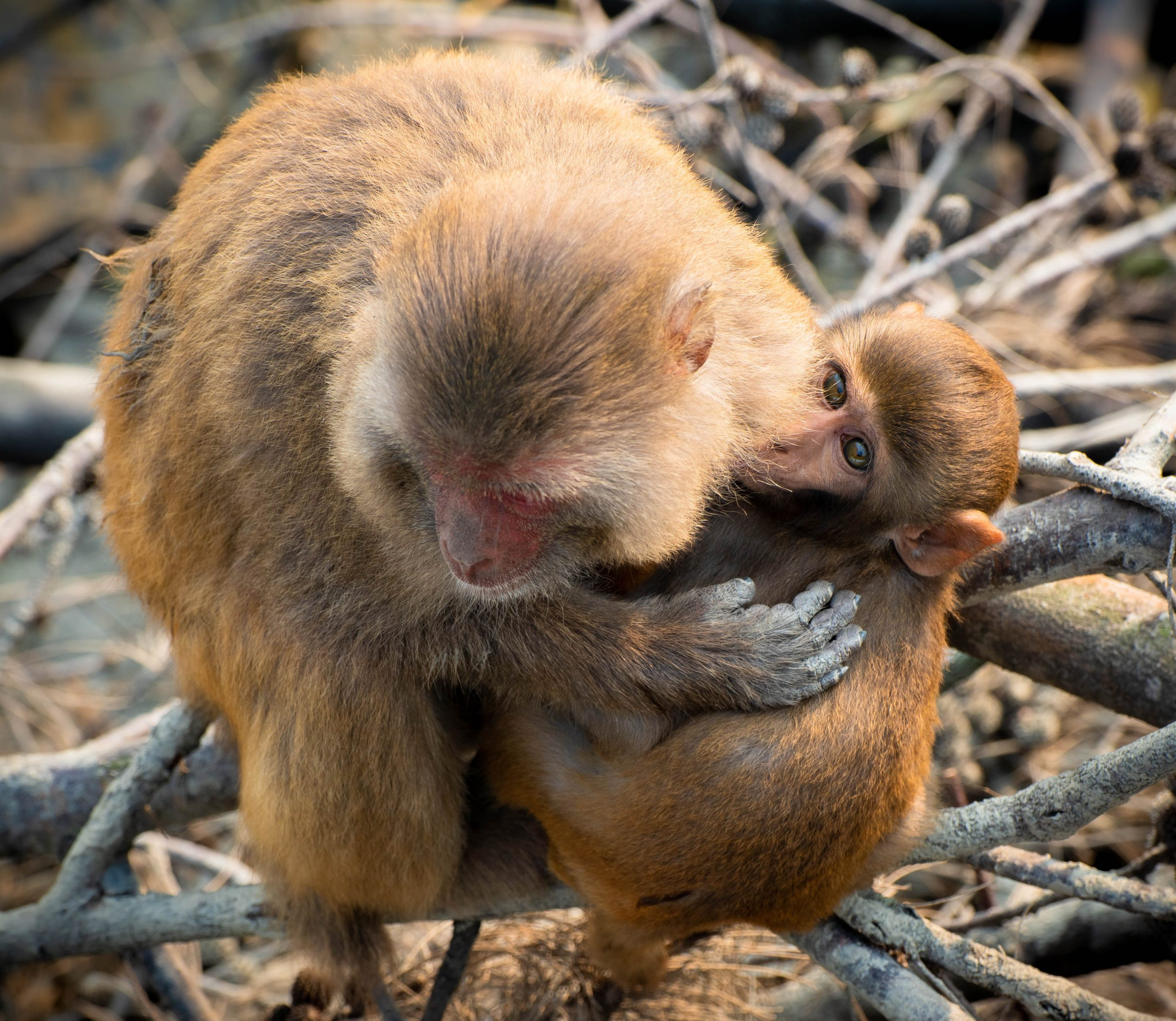 A mother monkey with baby monkey