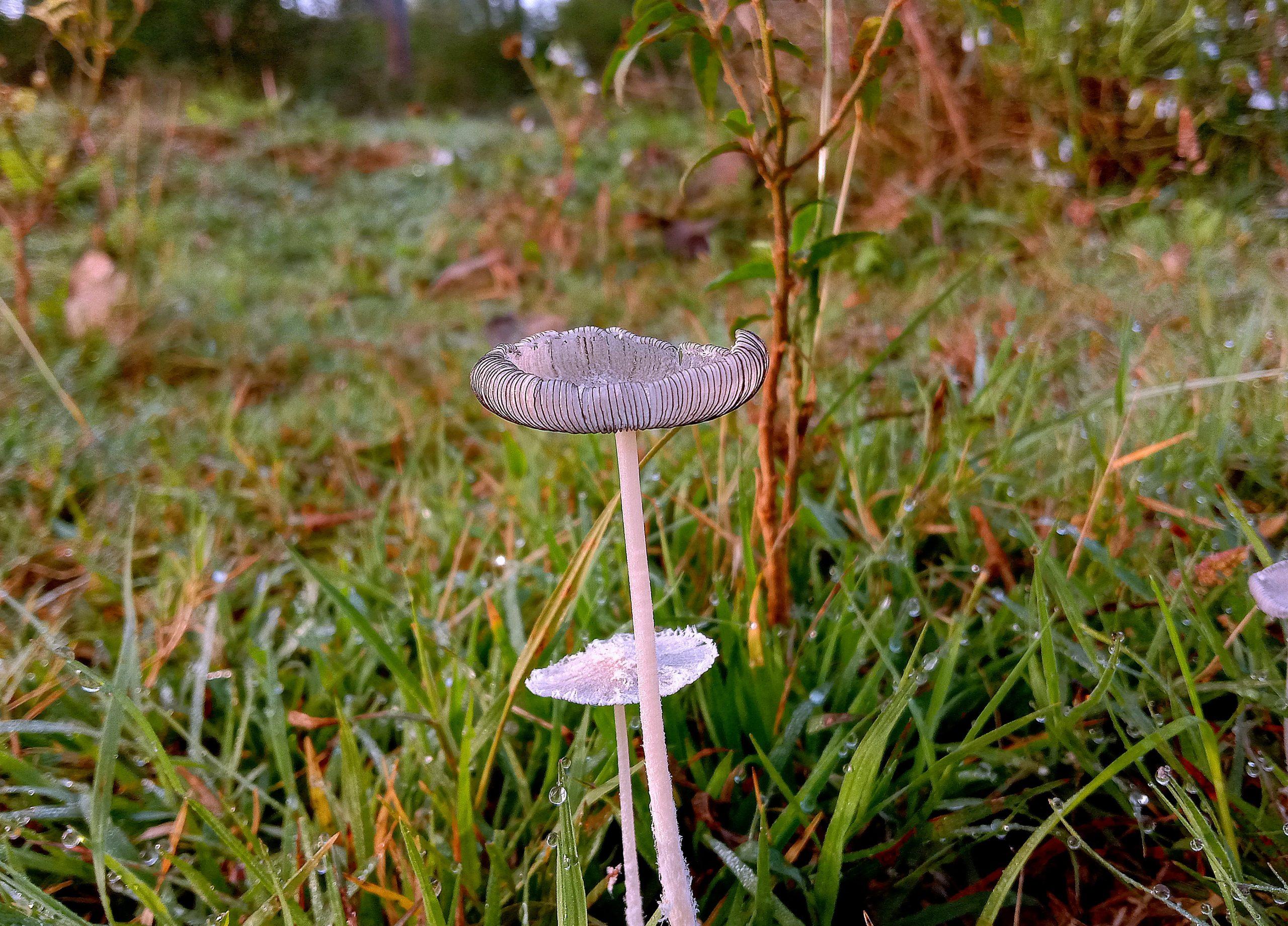 A mushroom plant