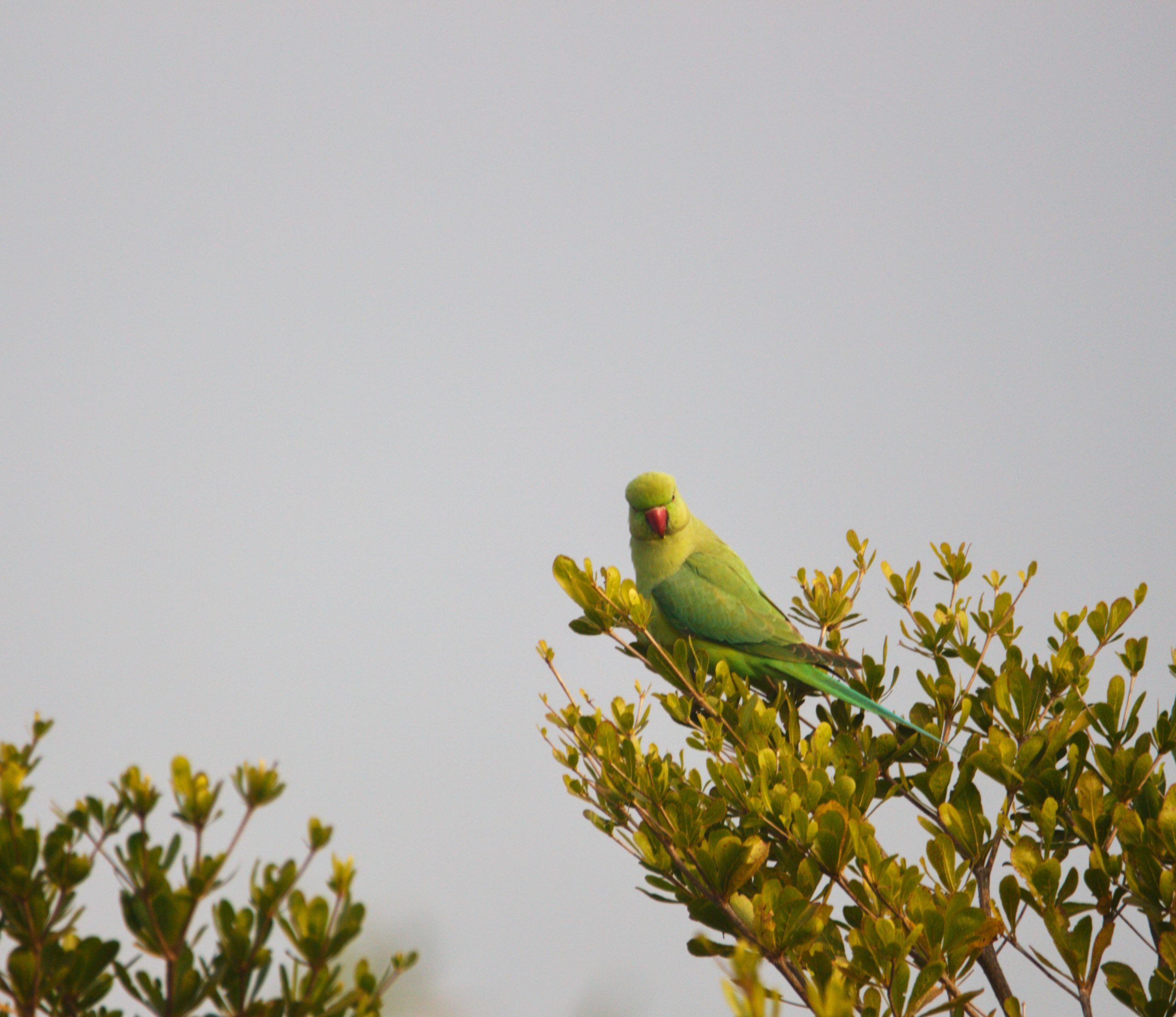 A parrot on a tree