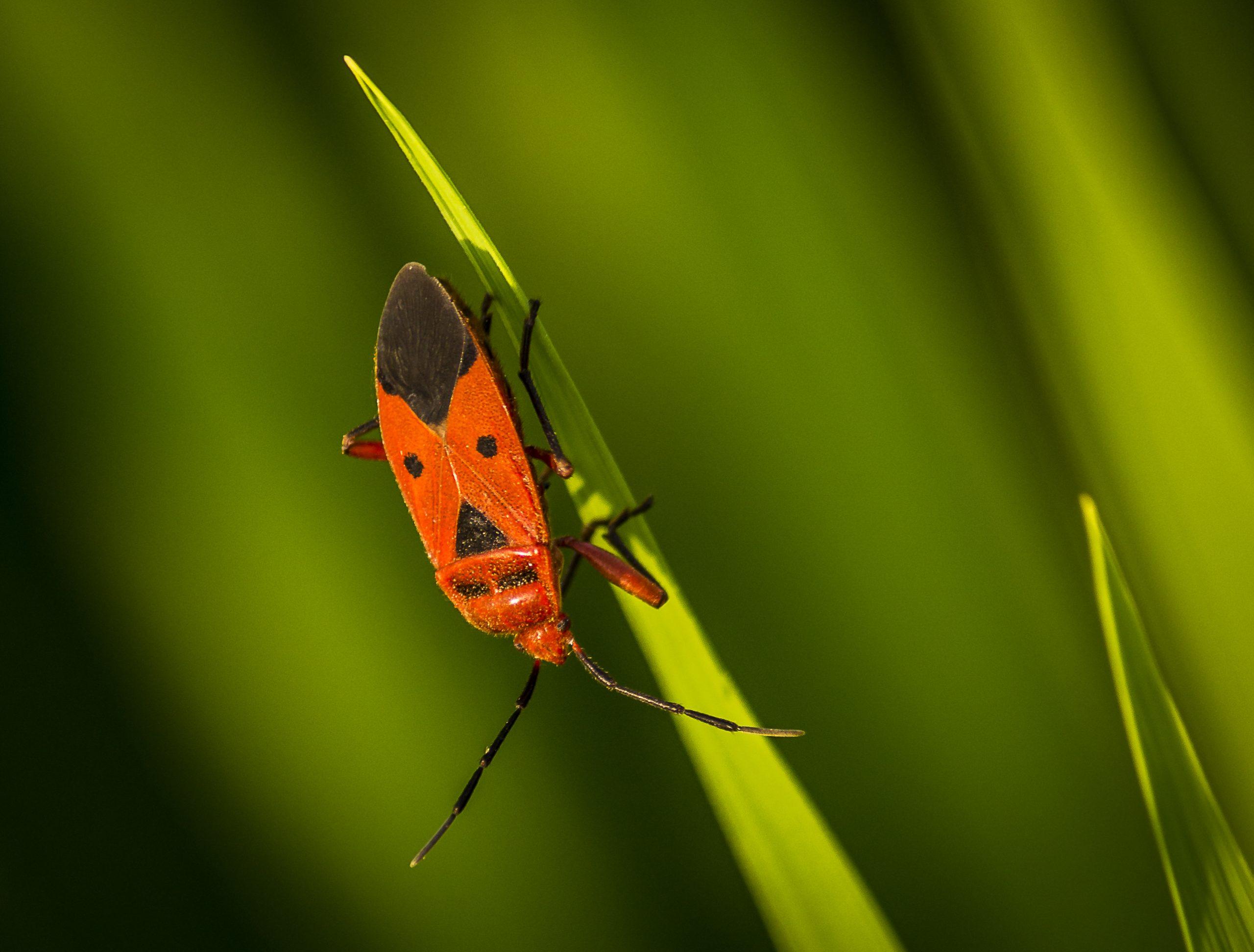 A red bug on a leaf