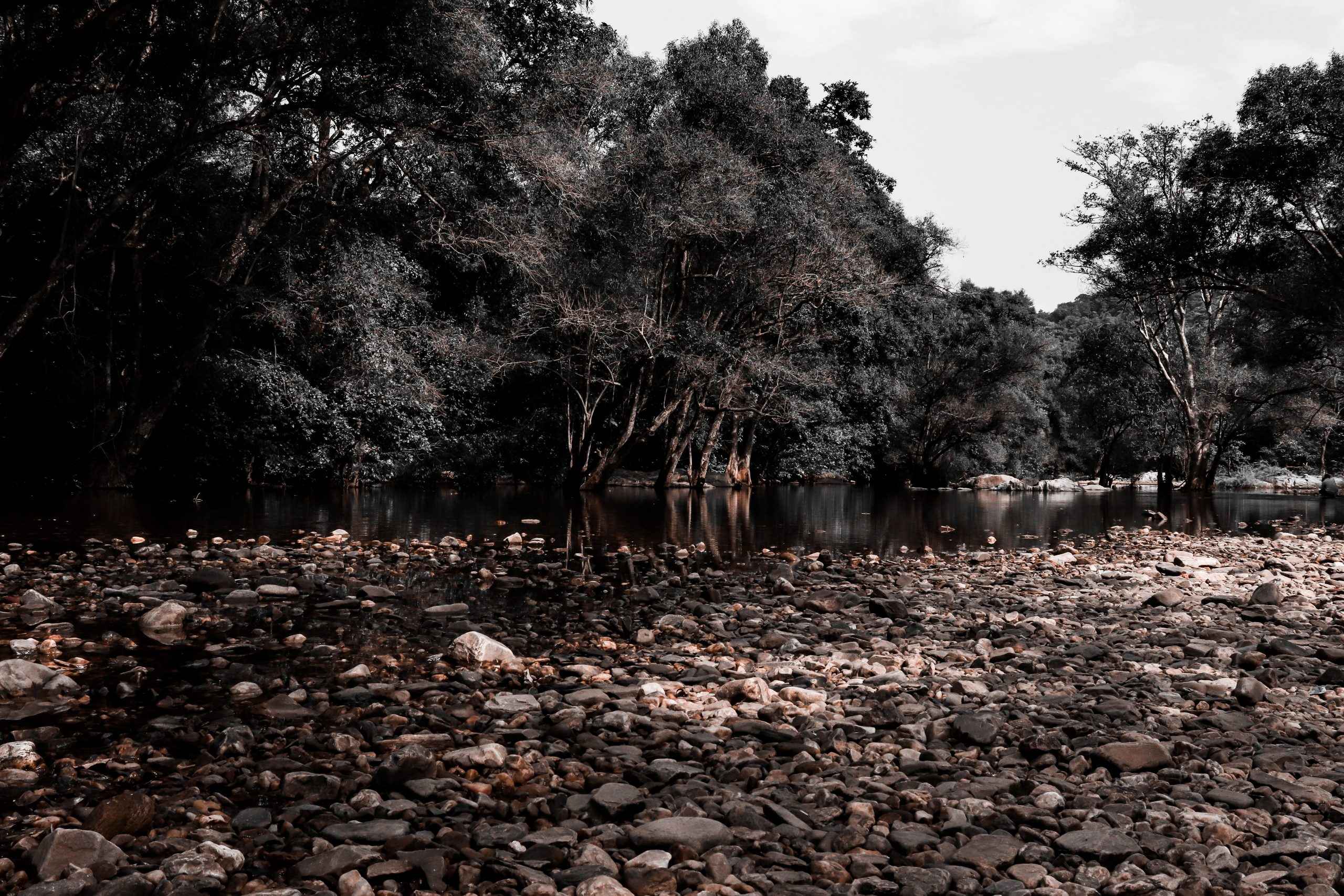 A river portrait in forest