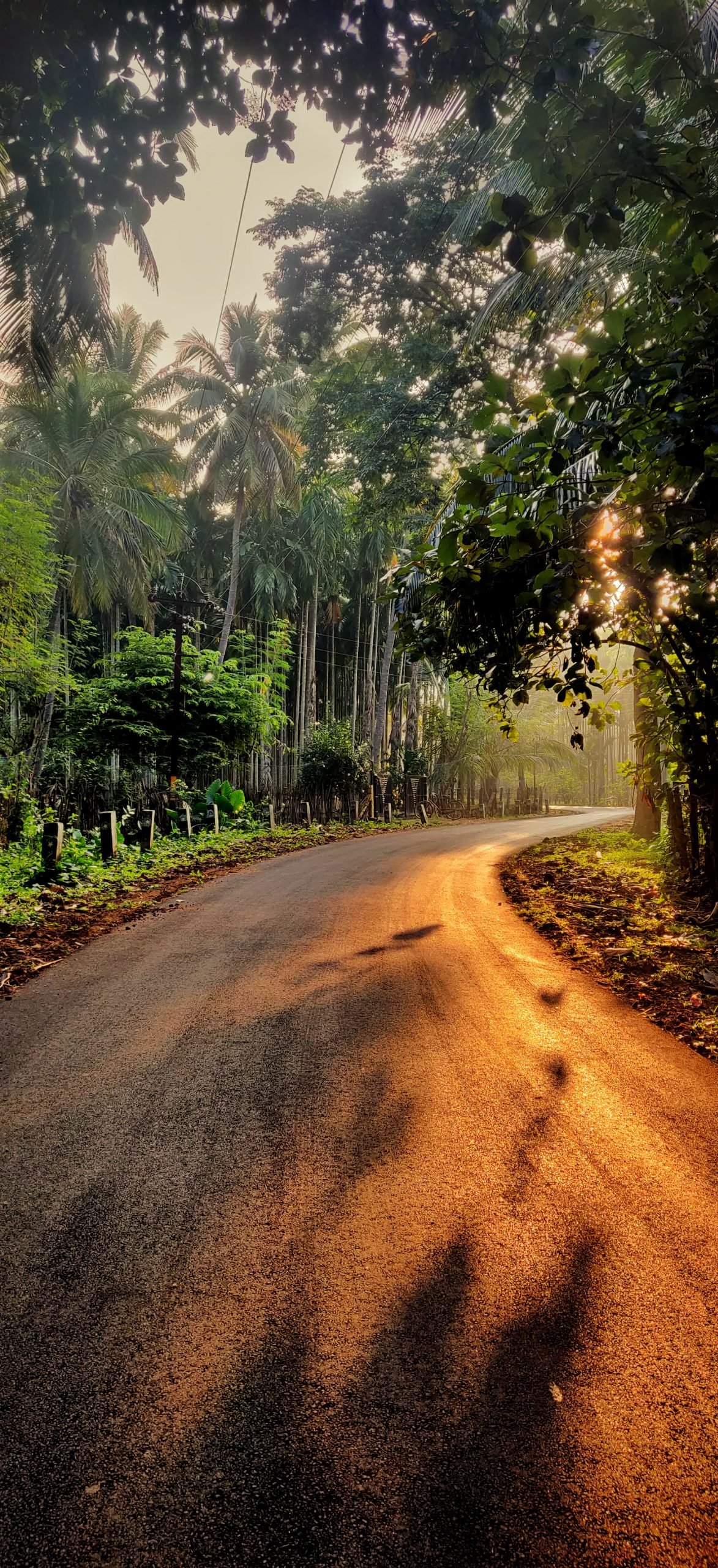 A road in forest