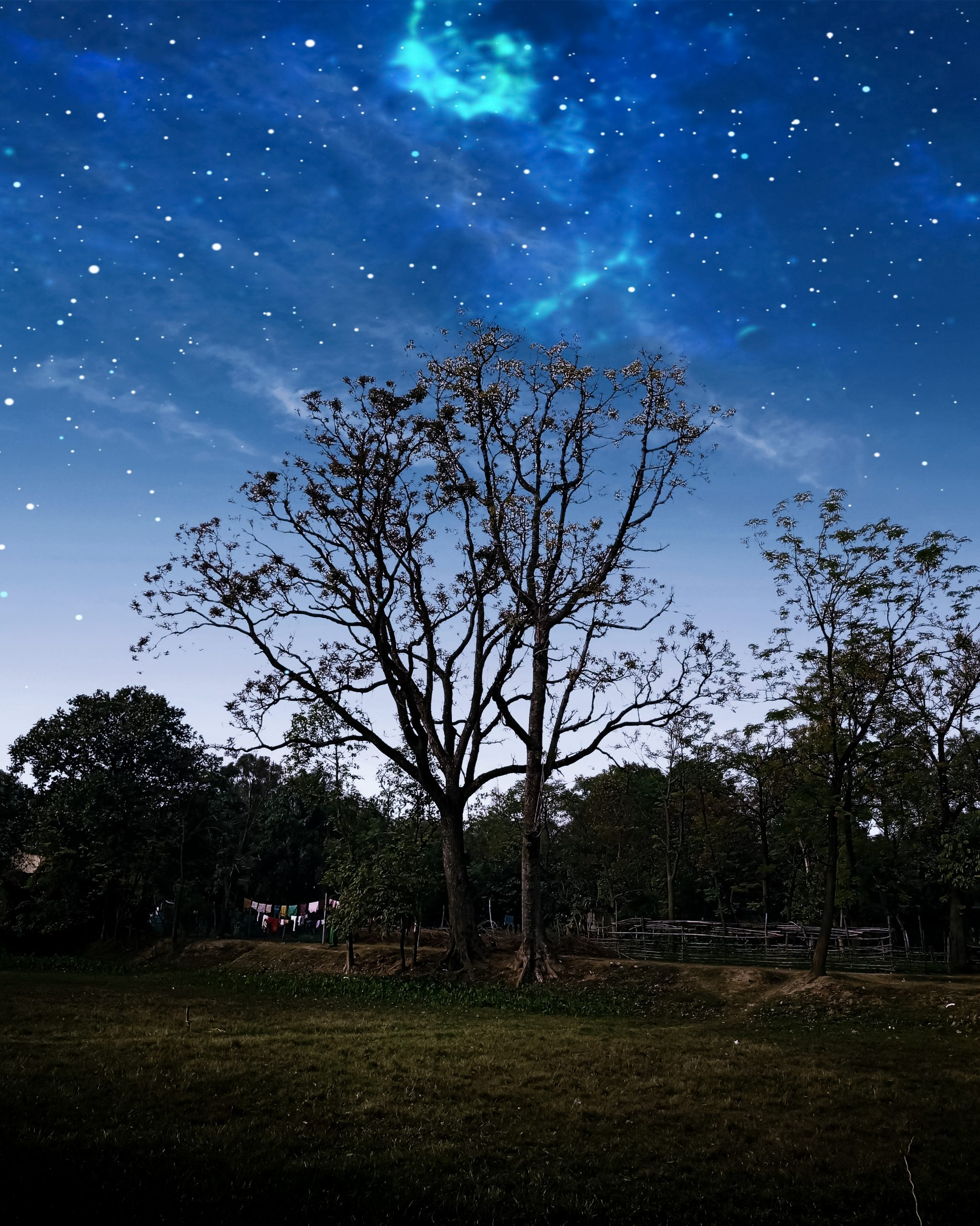 A tree and star in sky