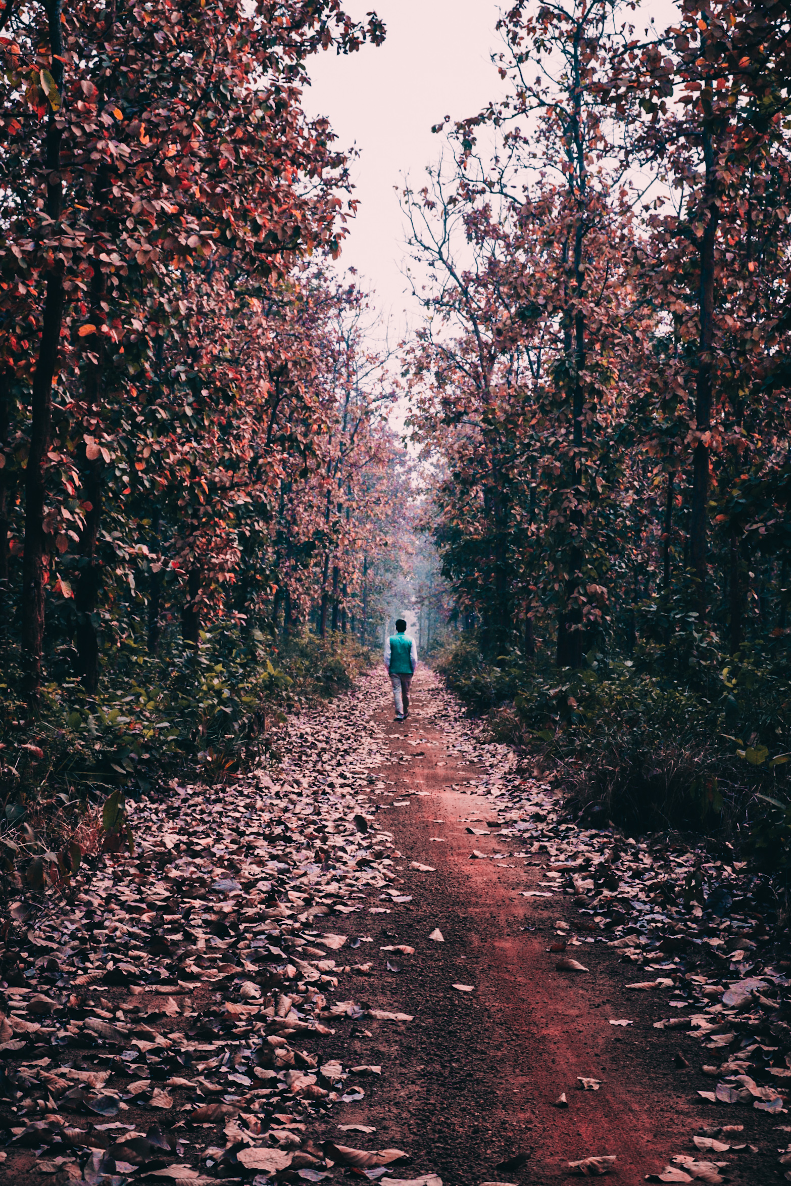A walkway in a jungle