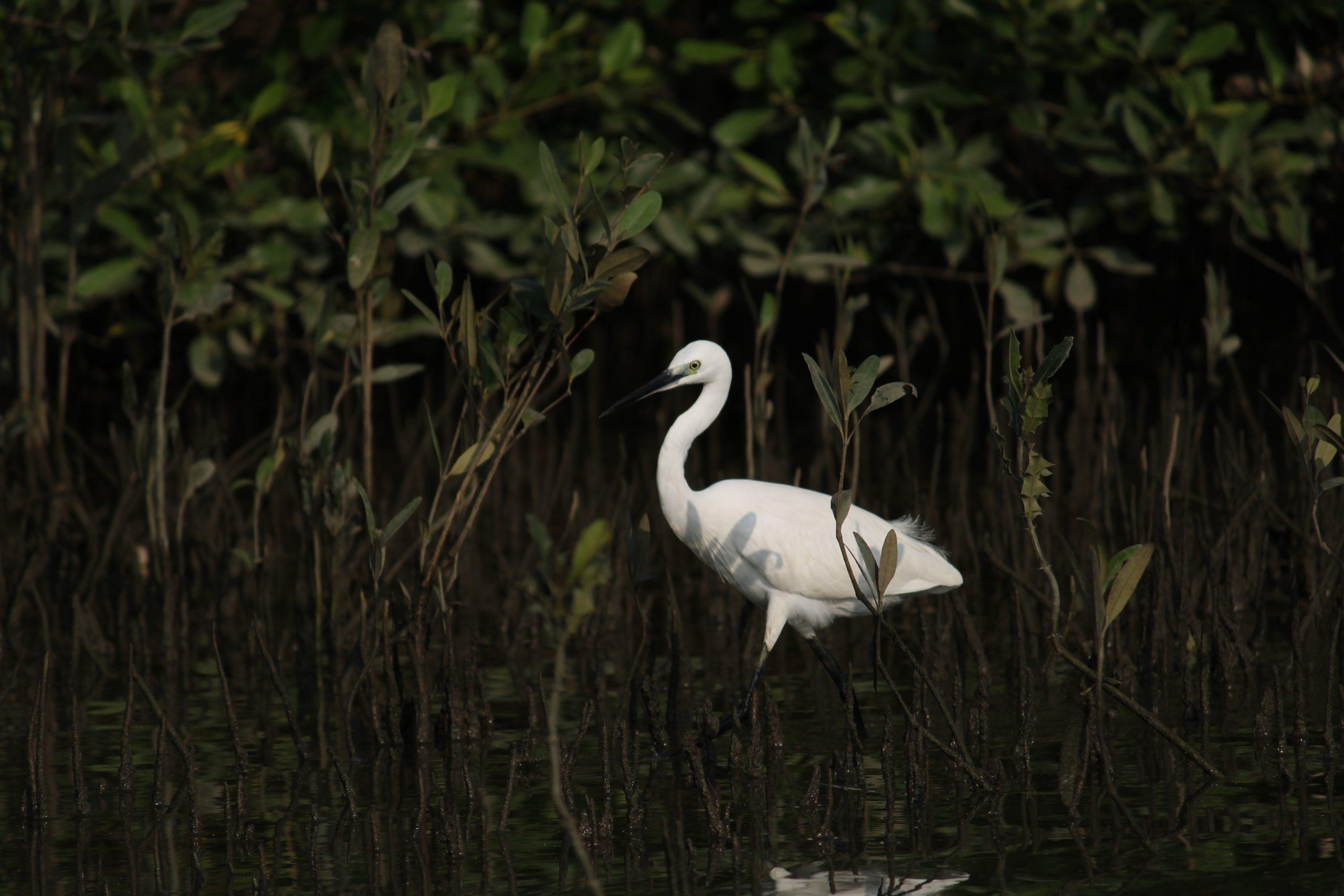 A white crane bird