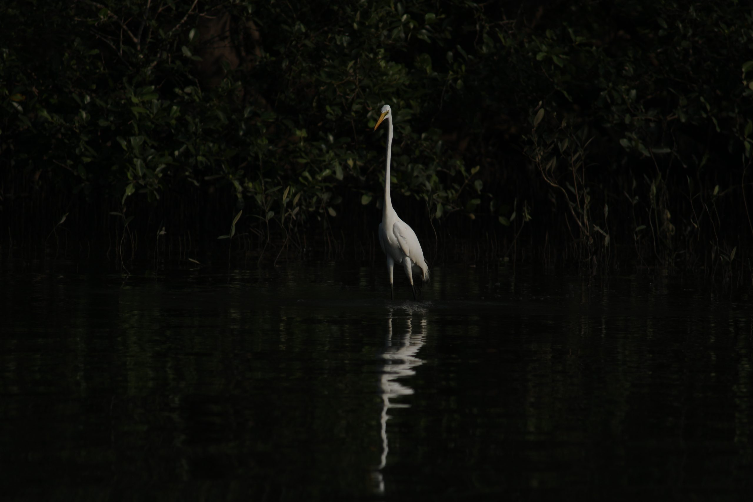 A :Long neck white crane bird.