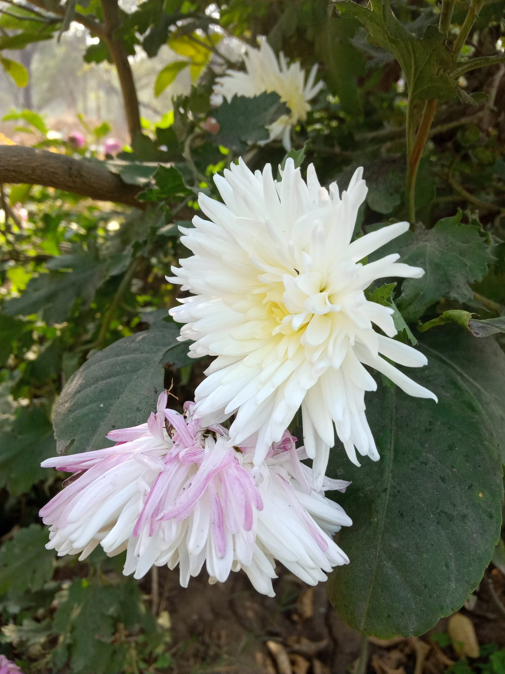 A white flowers