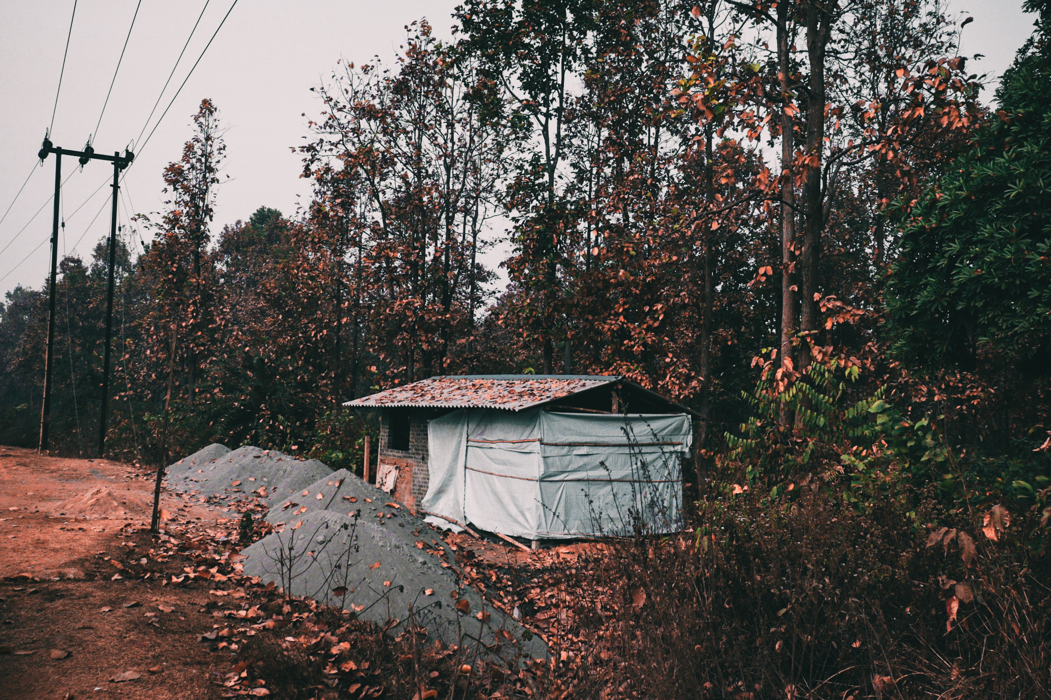 A cabin in a jungle