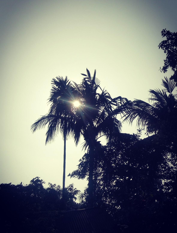 Sun raise through a Coconut tree
