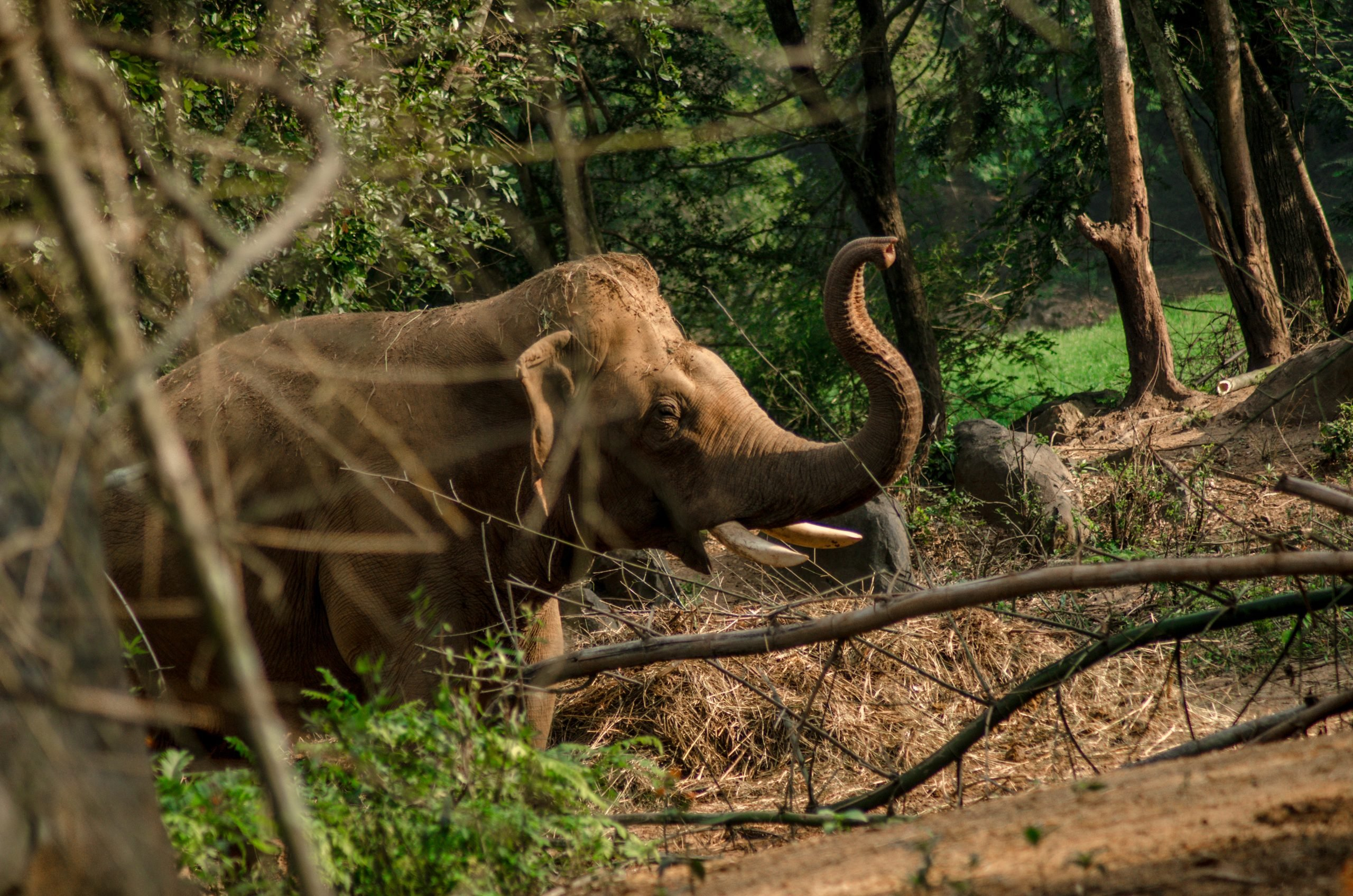 An Elephant at Bannerghatta National park