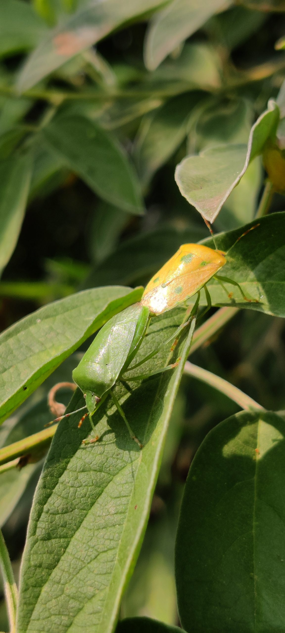 An insect on a leaf