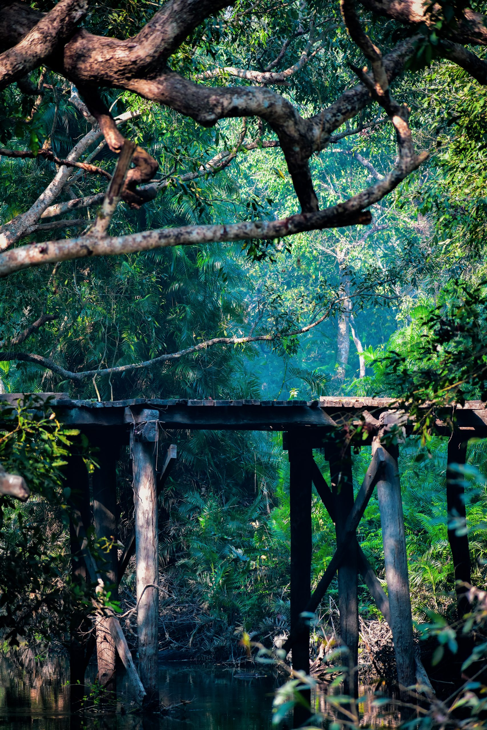 An old wooden bridge in a jungle