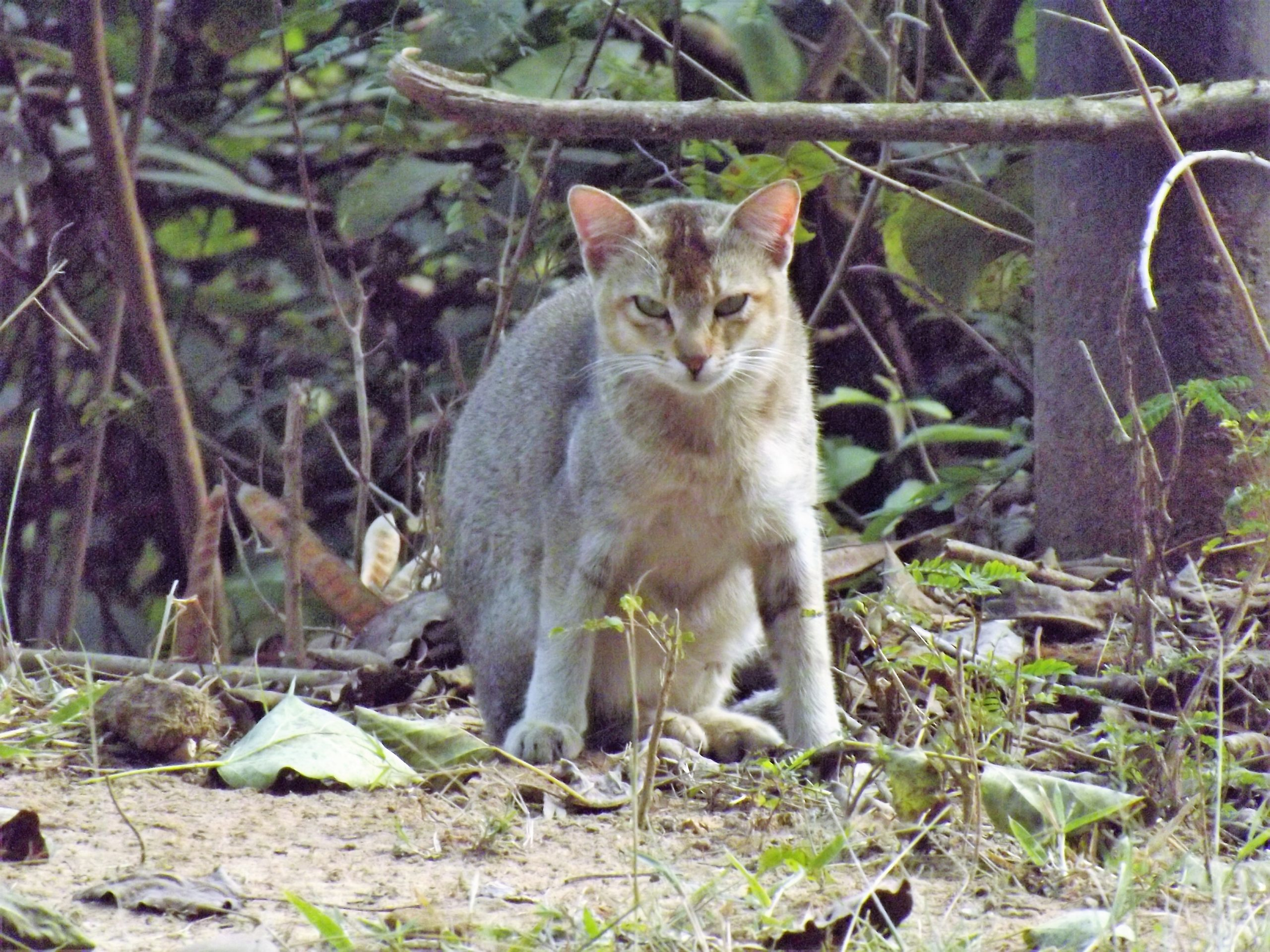 Angry cat in forest