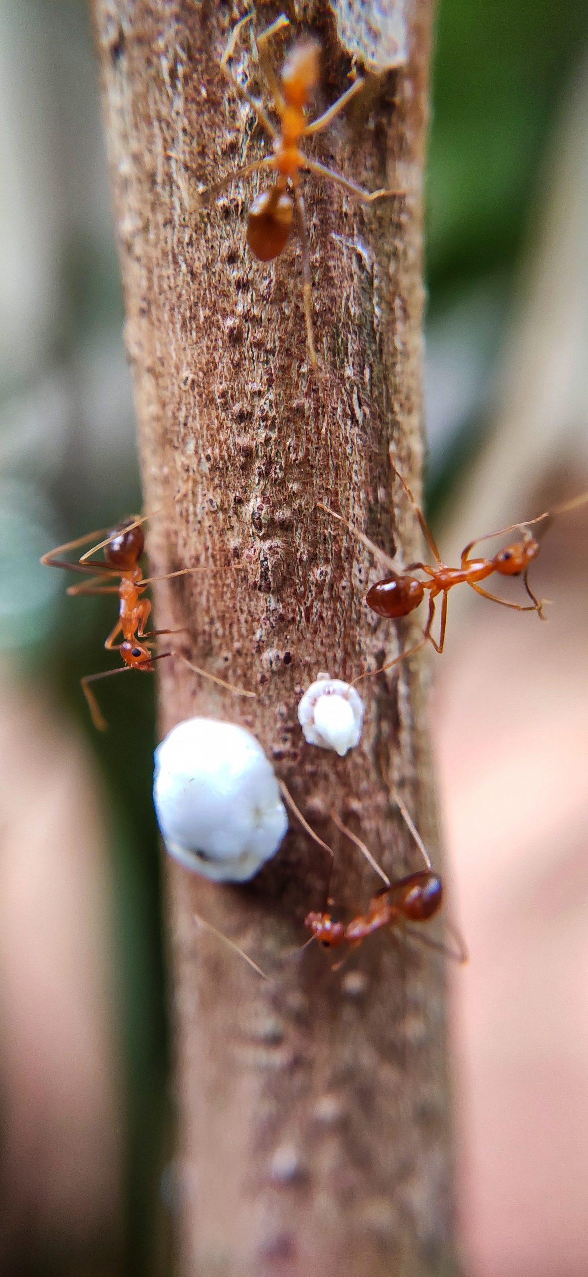 Ants on a tree stem