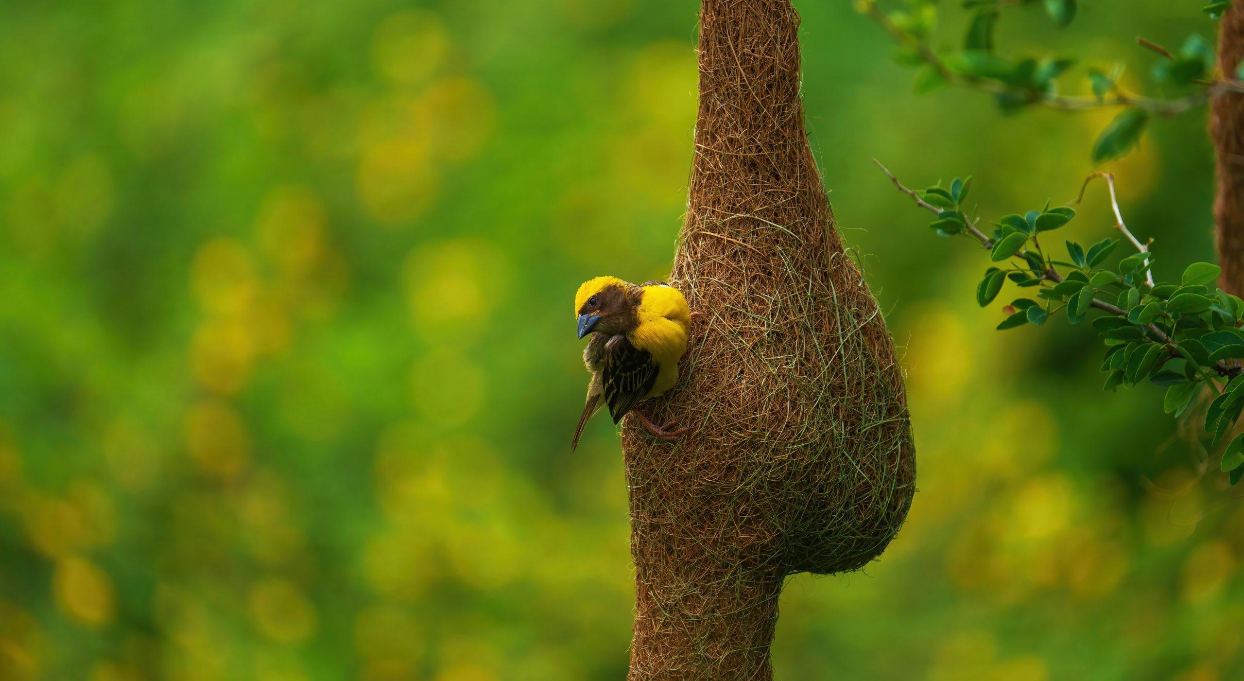 bird sitting on her nest