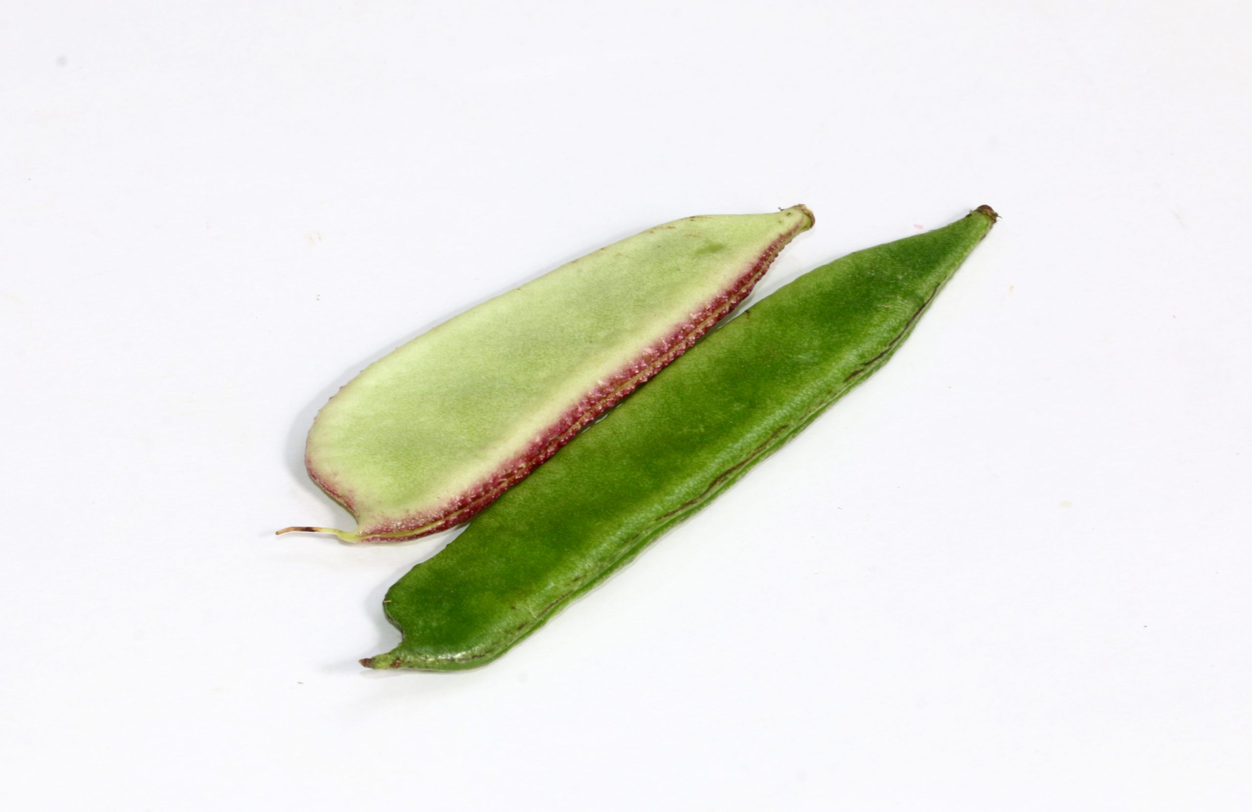 Green bean in white background