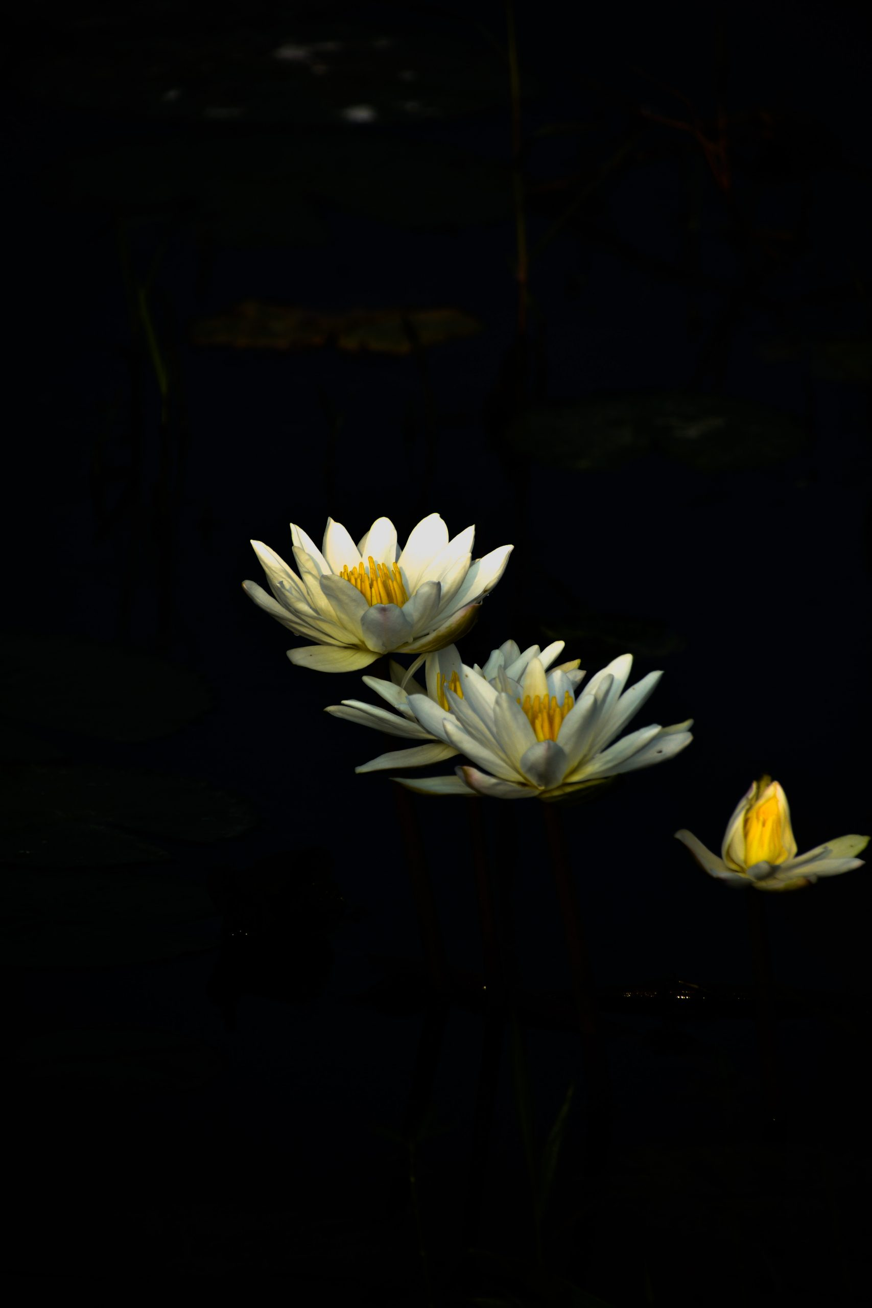 Blooming flower in dark