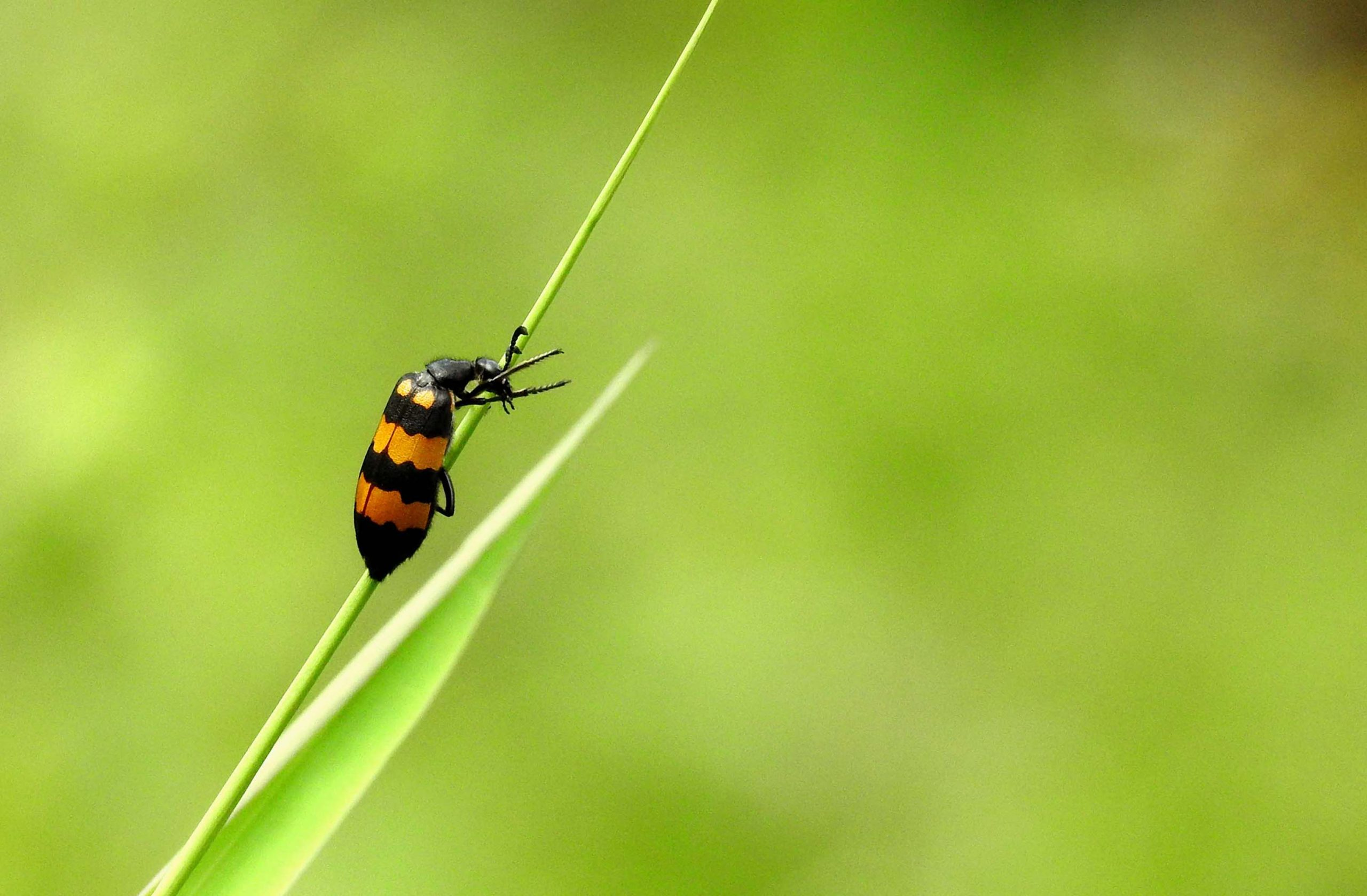Beetle on leaf