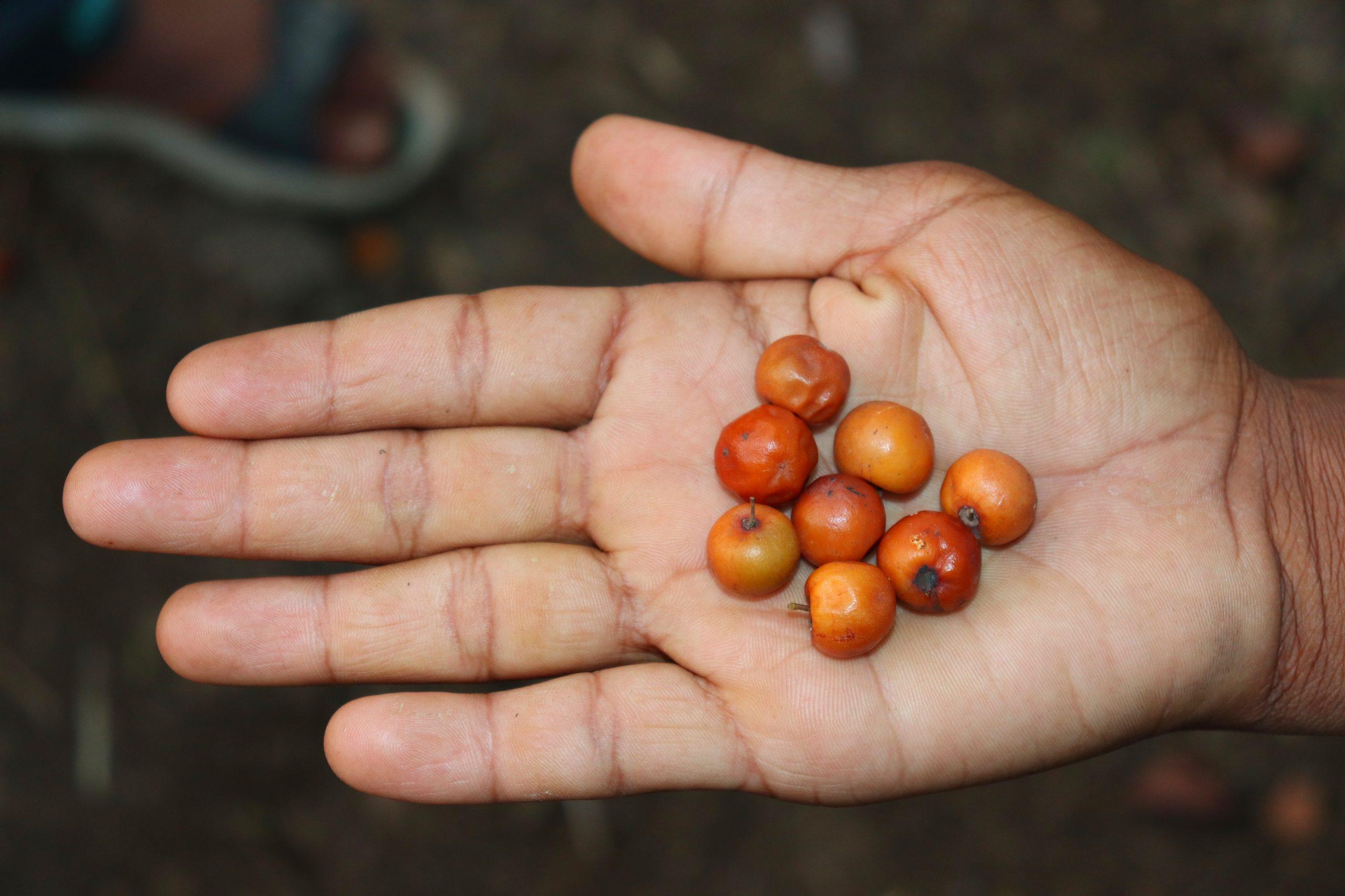 Berries in hand