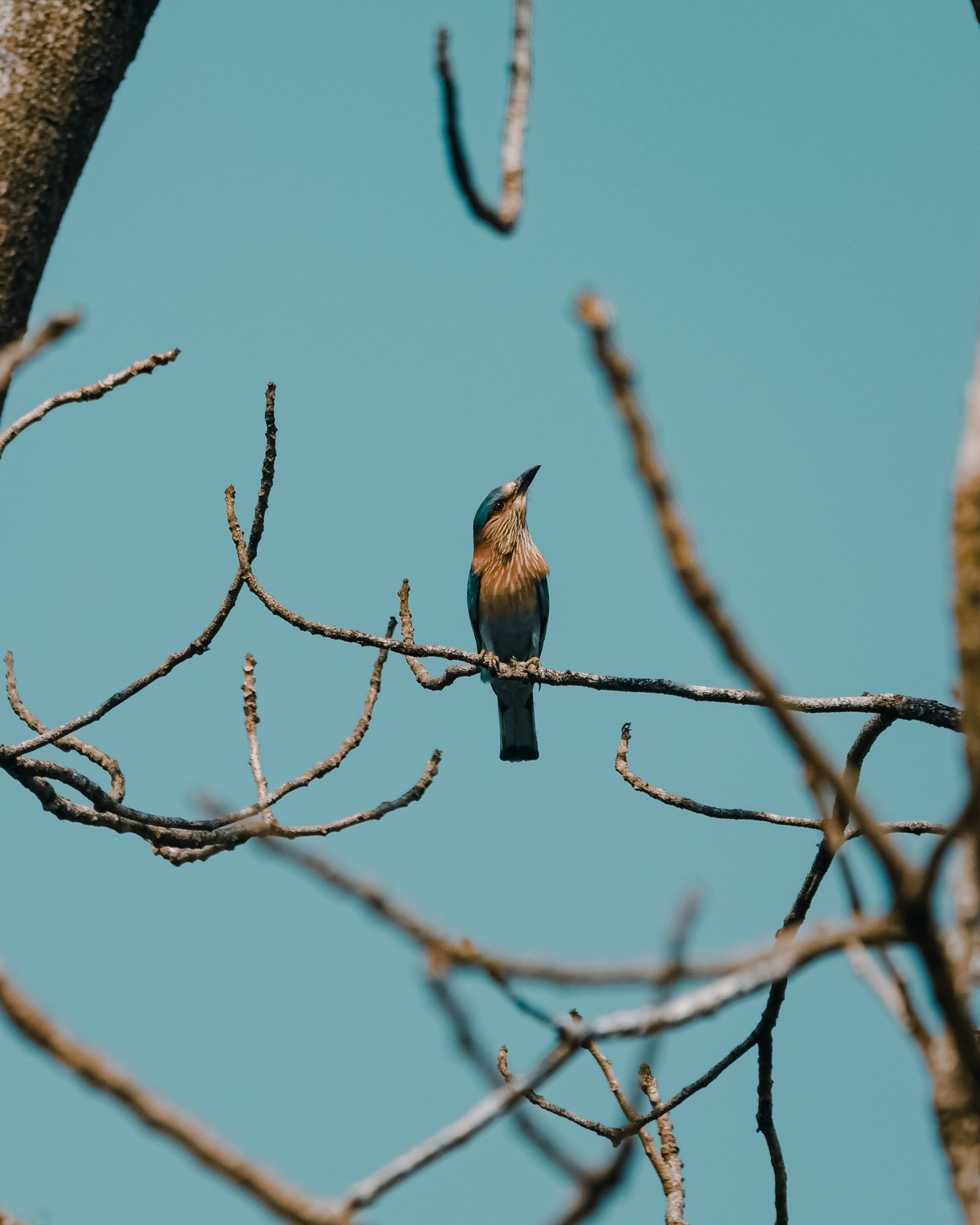 Bird sitting on tree branch