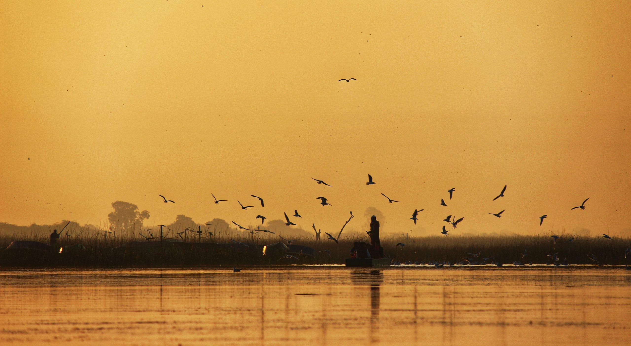 flock of bird flying