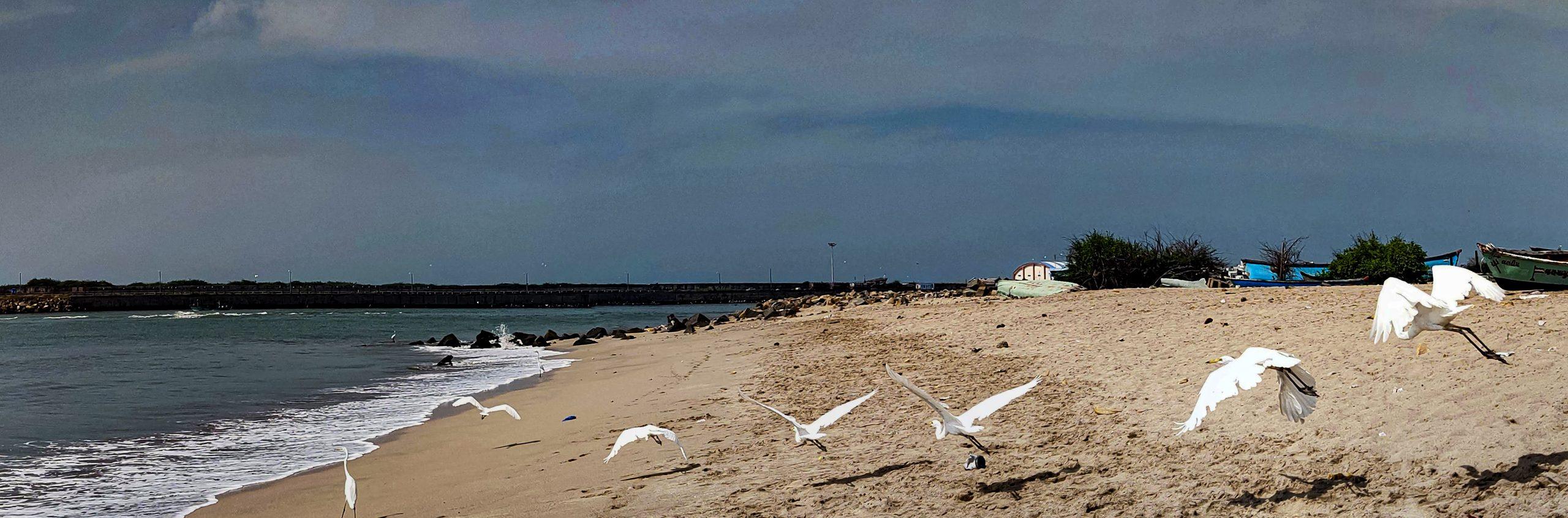 Birds flying beachside
