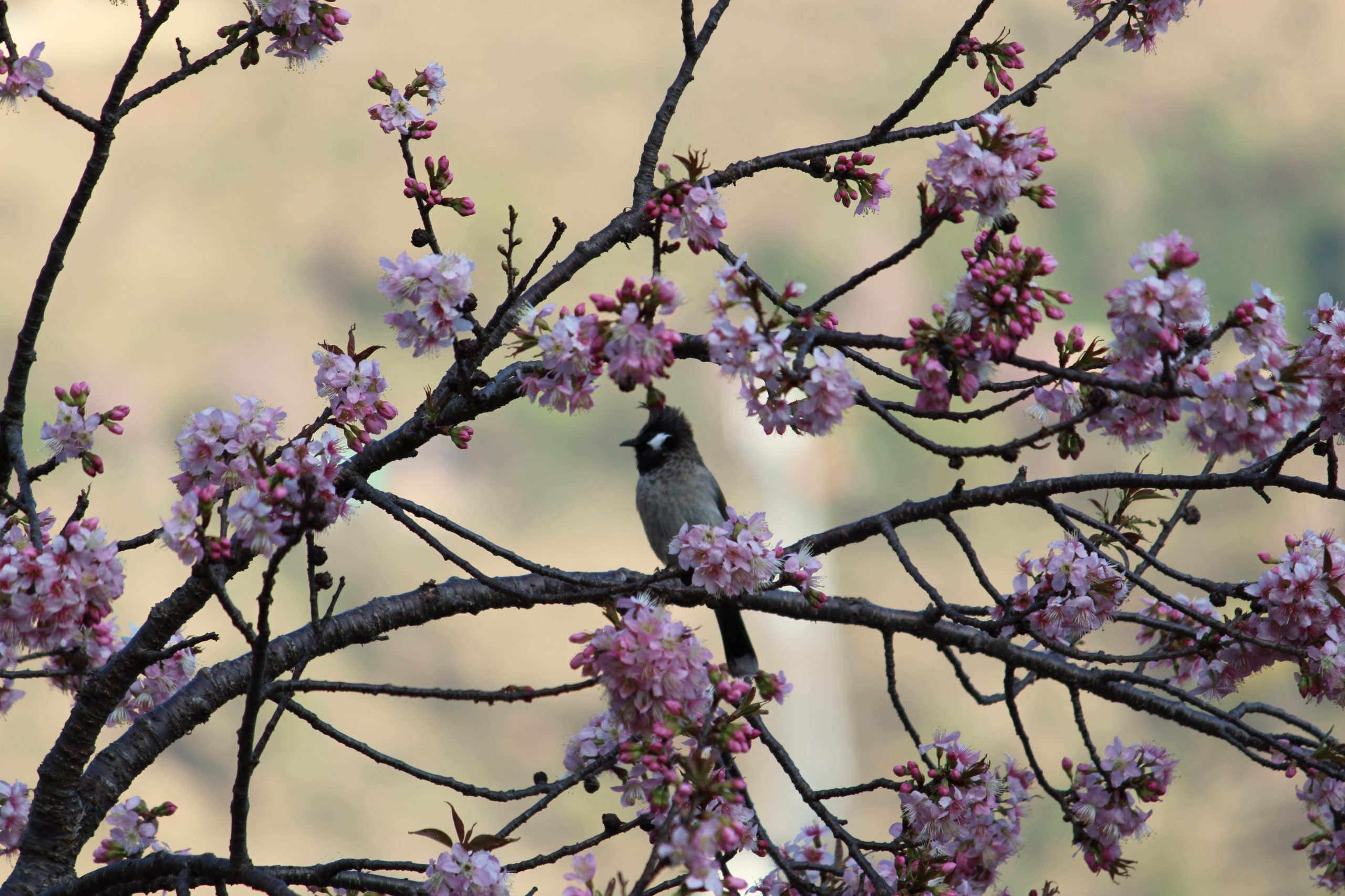 Bird enjoying on a full blooming tree