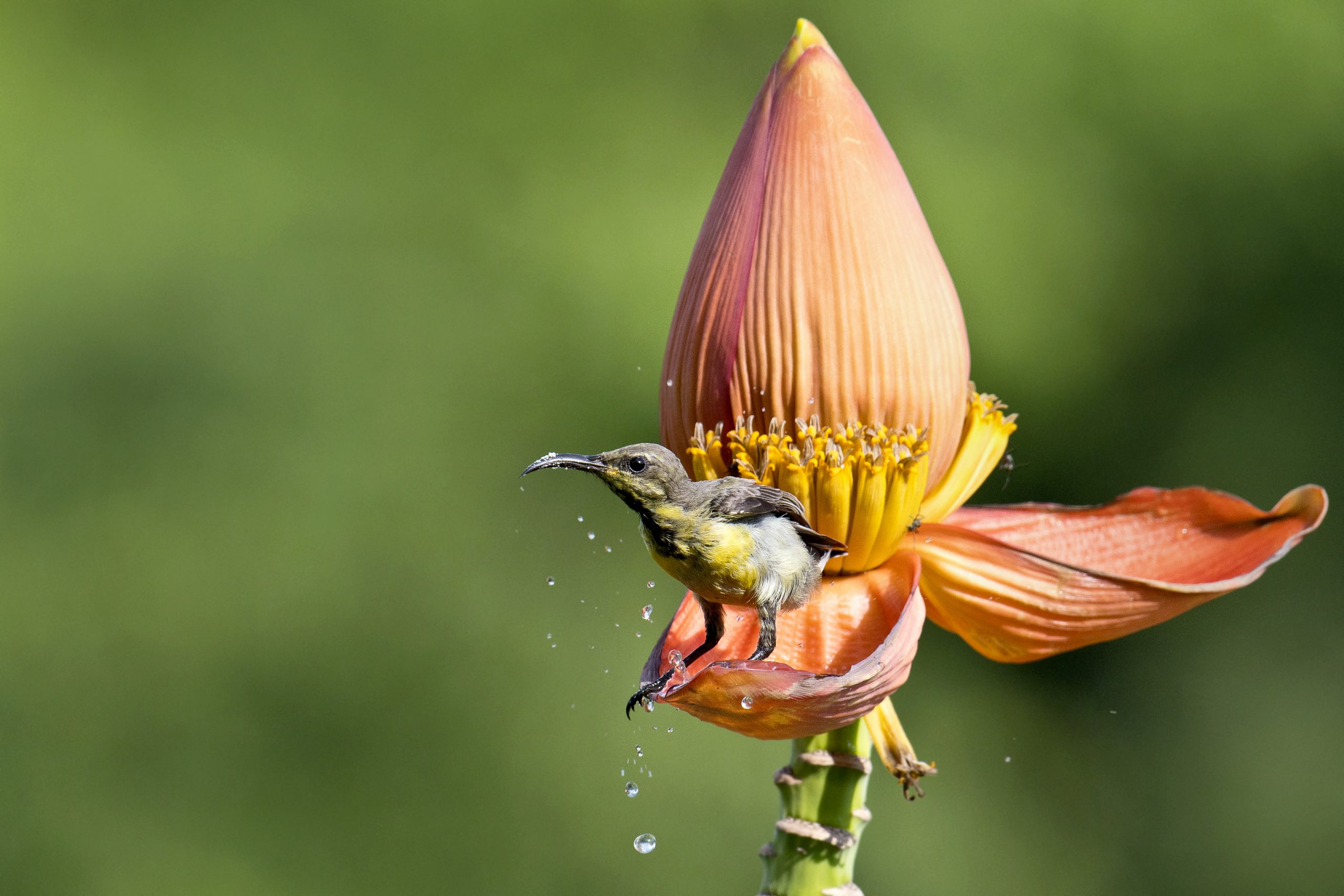 Bird sitting on the petal of the flower