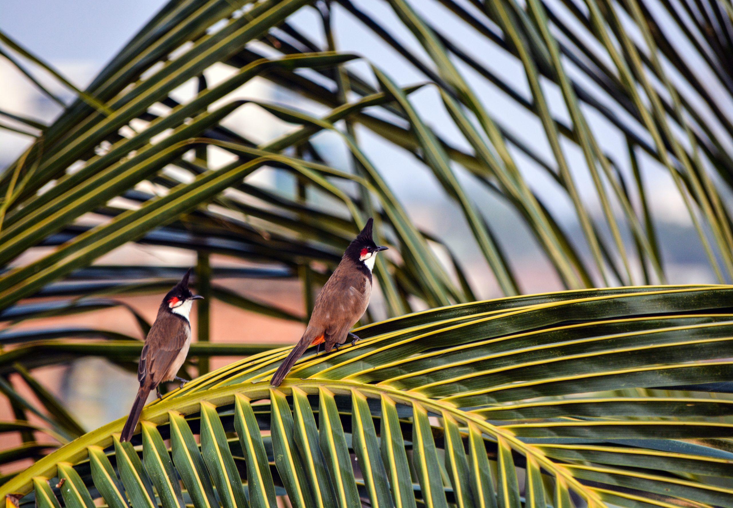 Birds at a branch