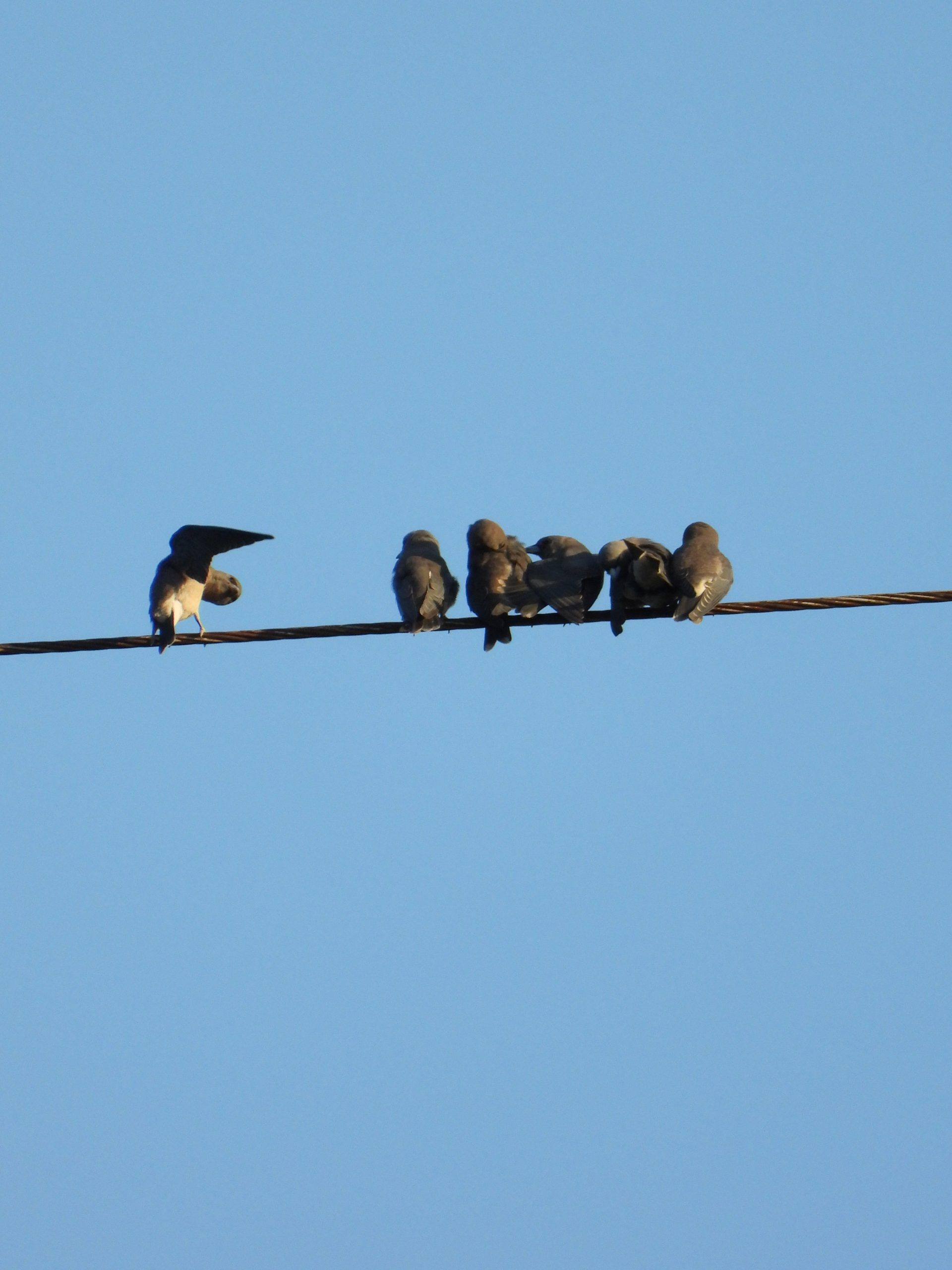 Birds on electric cable