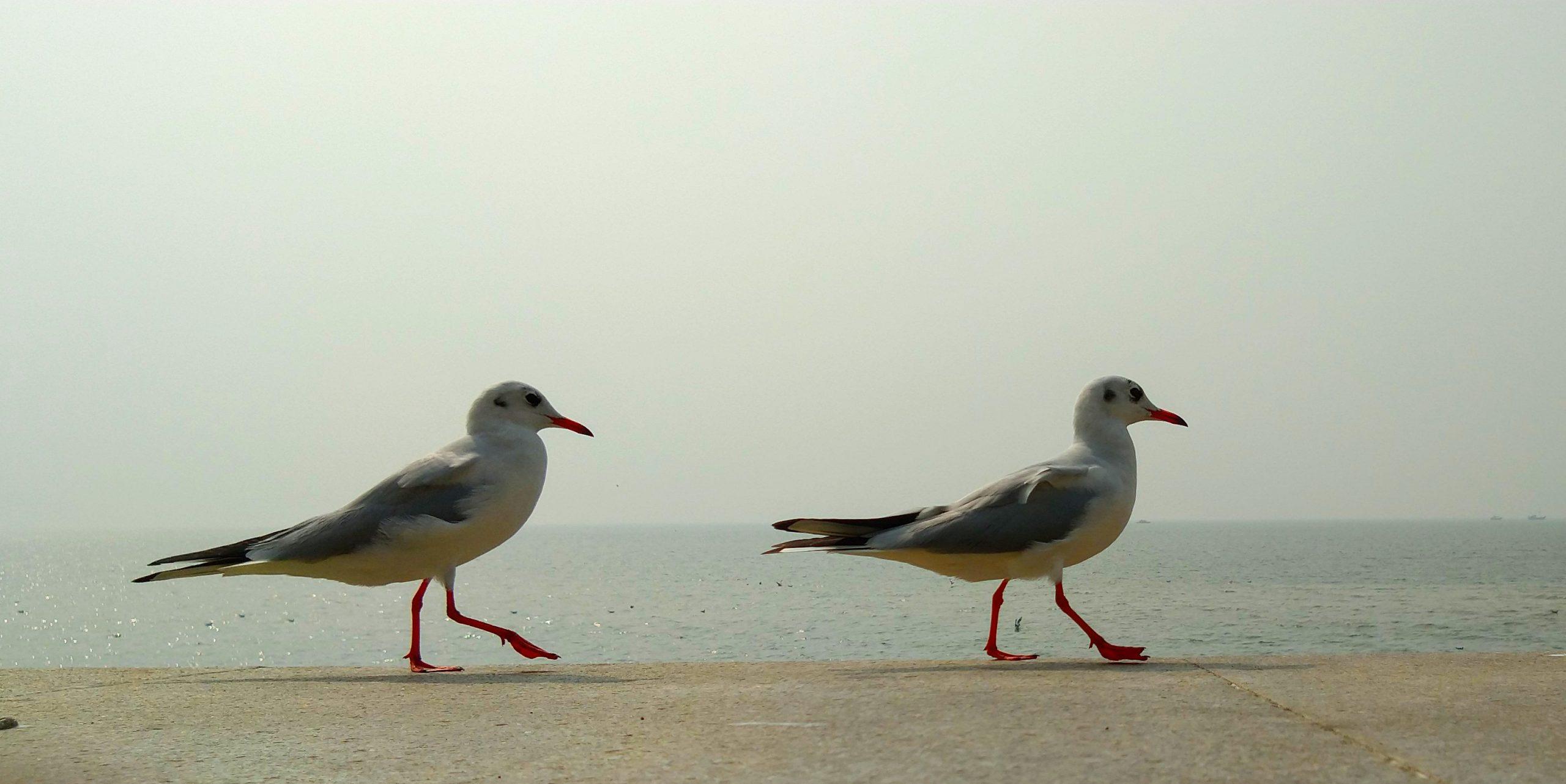birds at sea shore