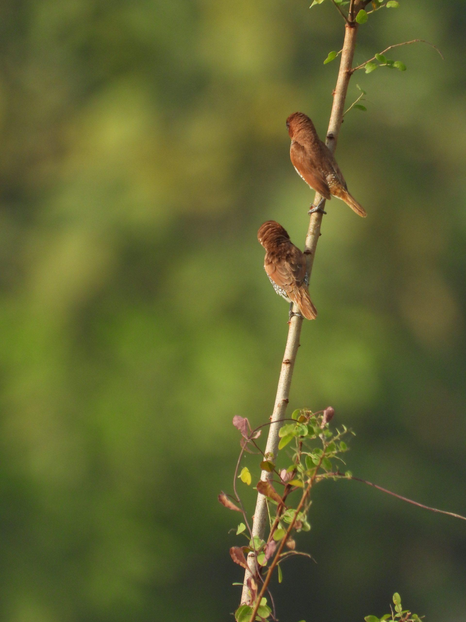Birds sitting on plant