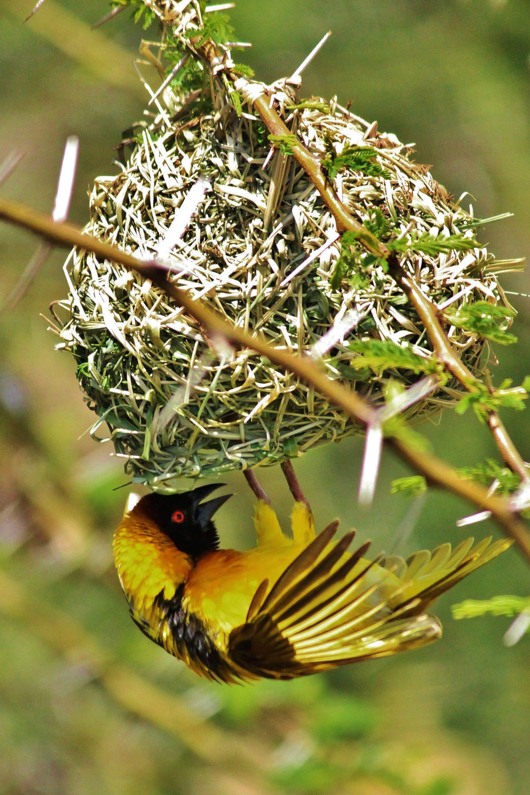 Bird creating nest