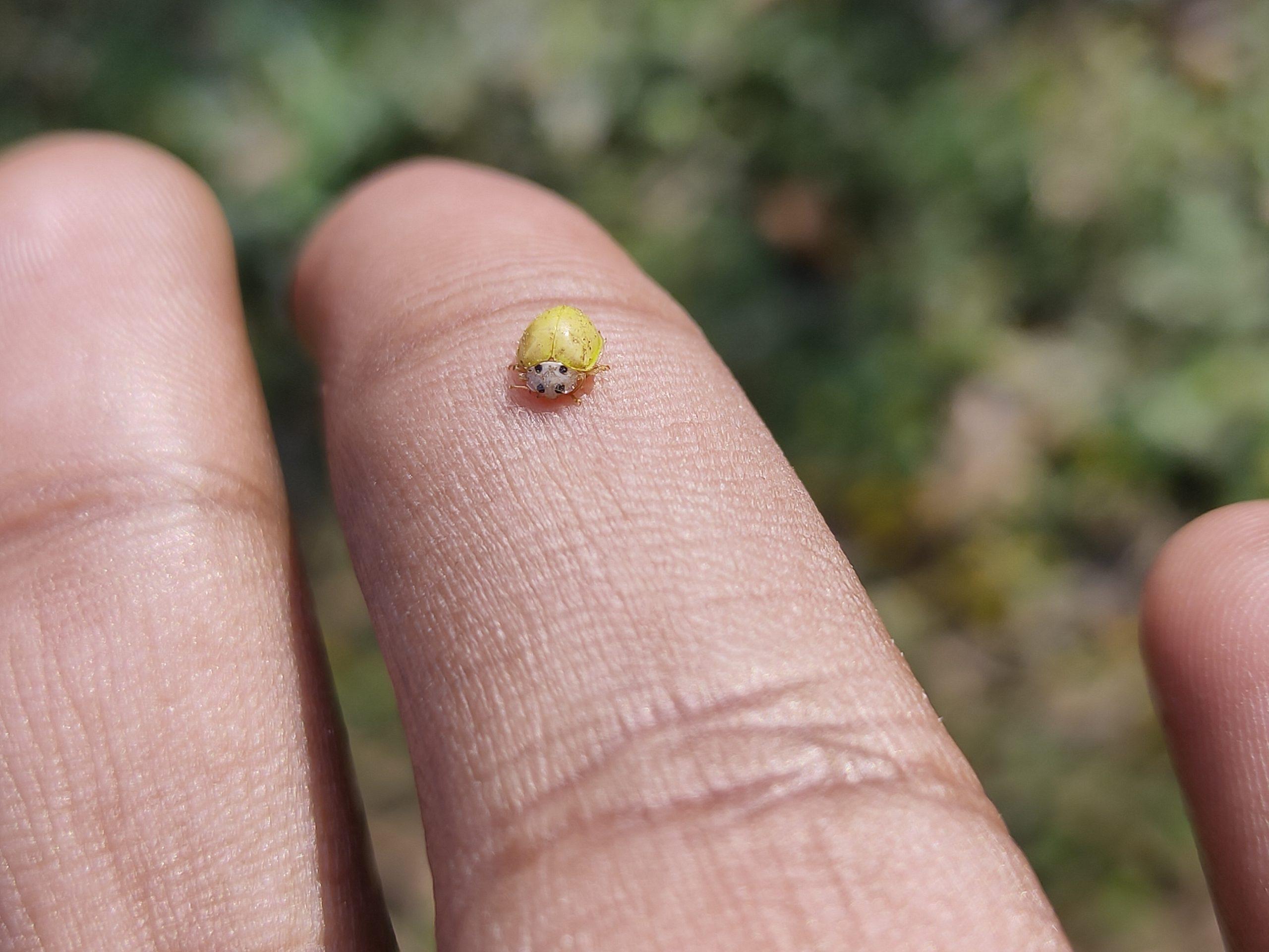 Bug on hand