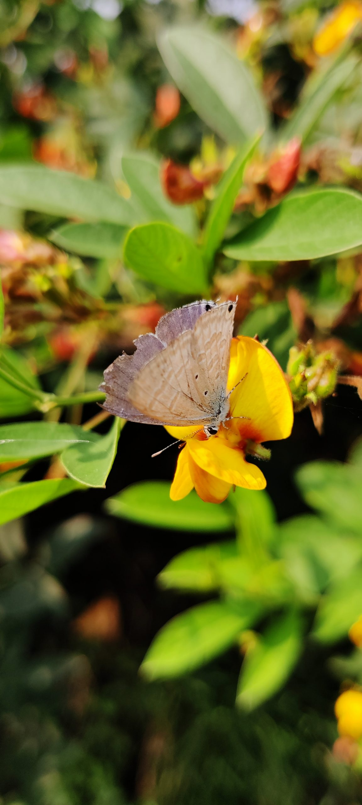 Small butterfly sitting on a flower