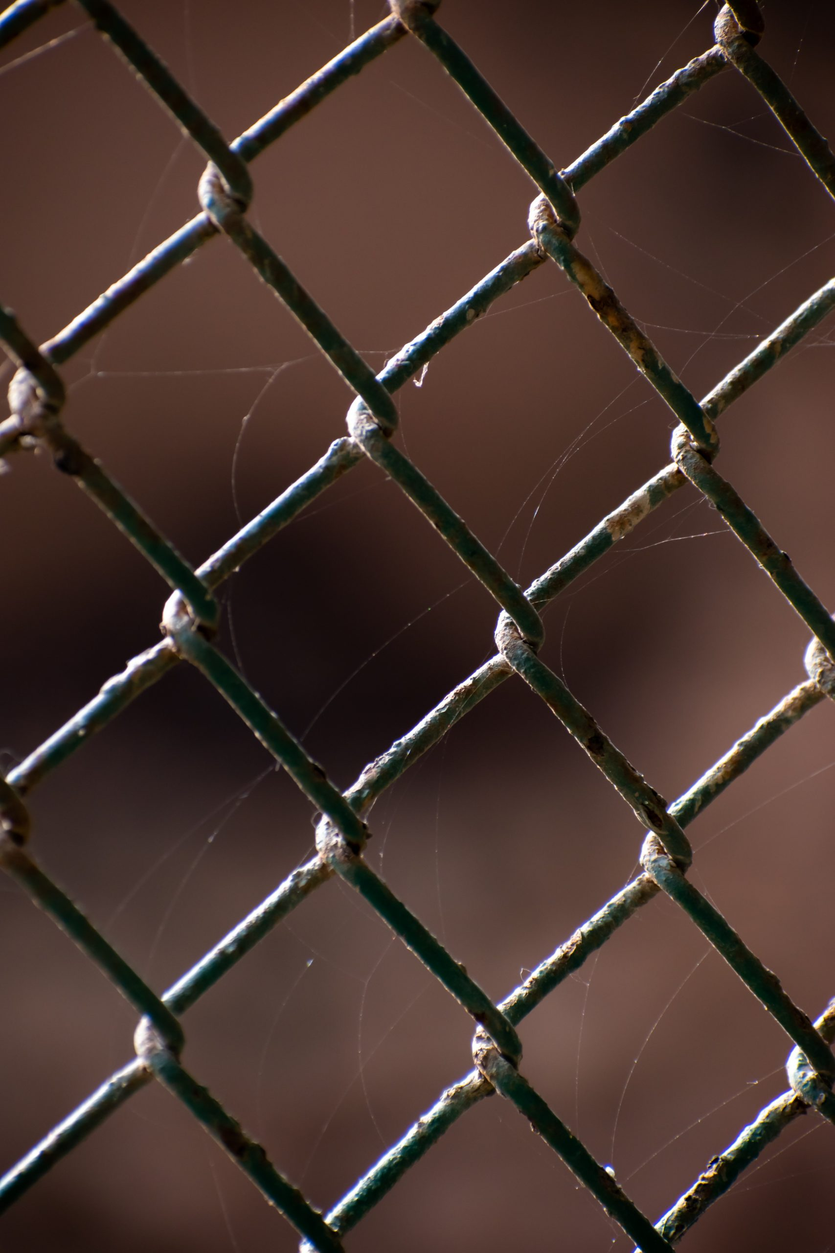 Spider web on steel cage