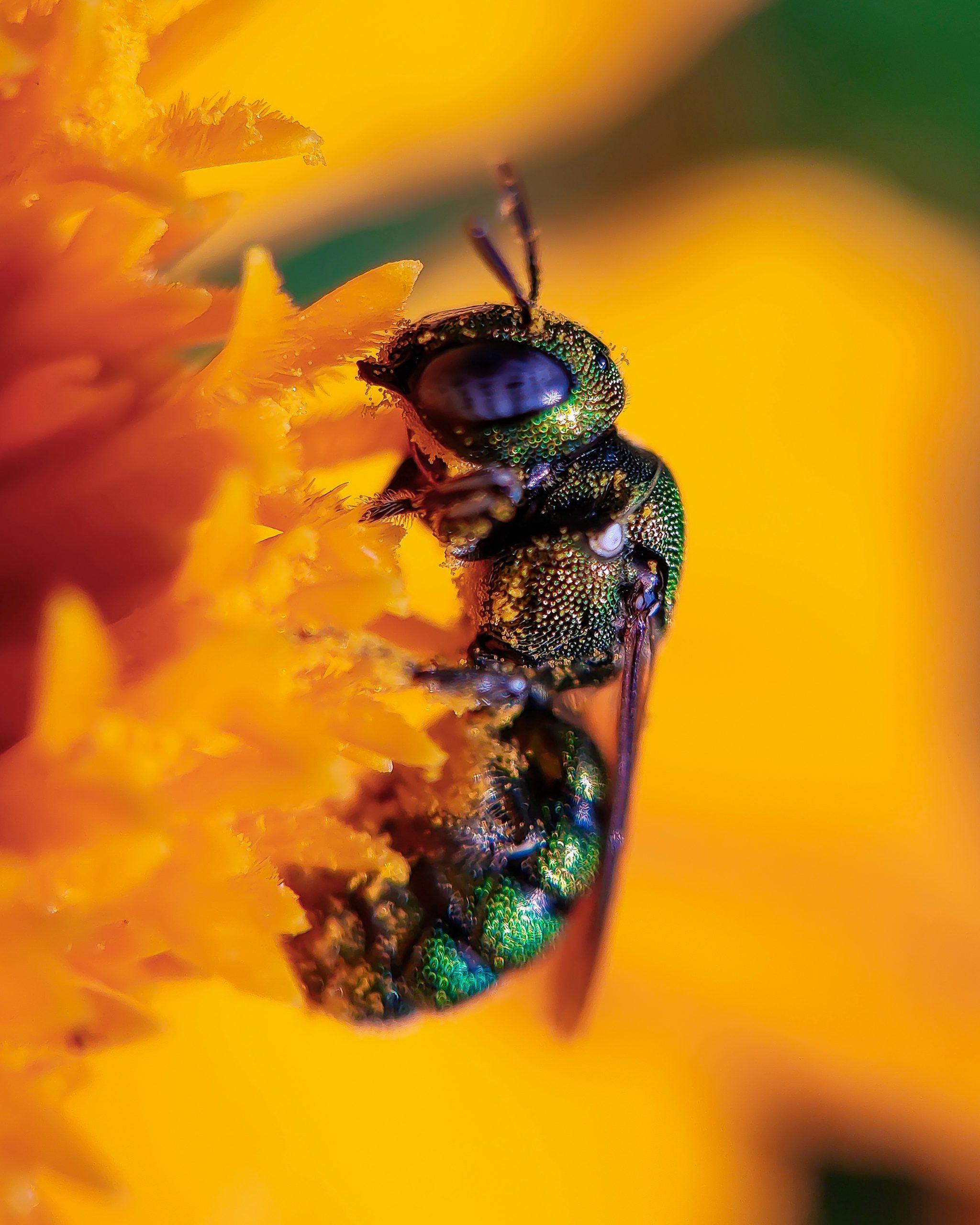 Camouflaged Nectar