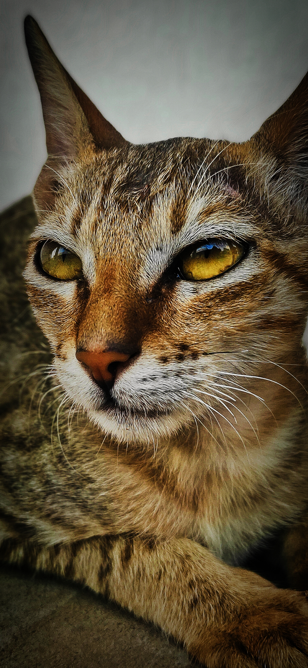 Portrait of a brown cat