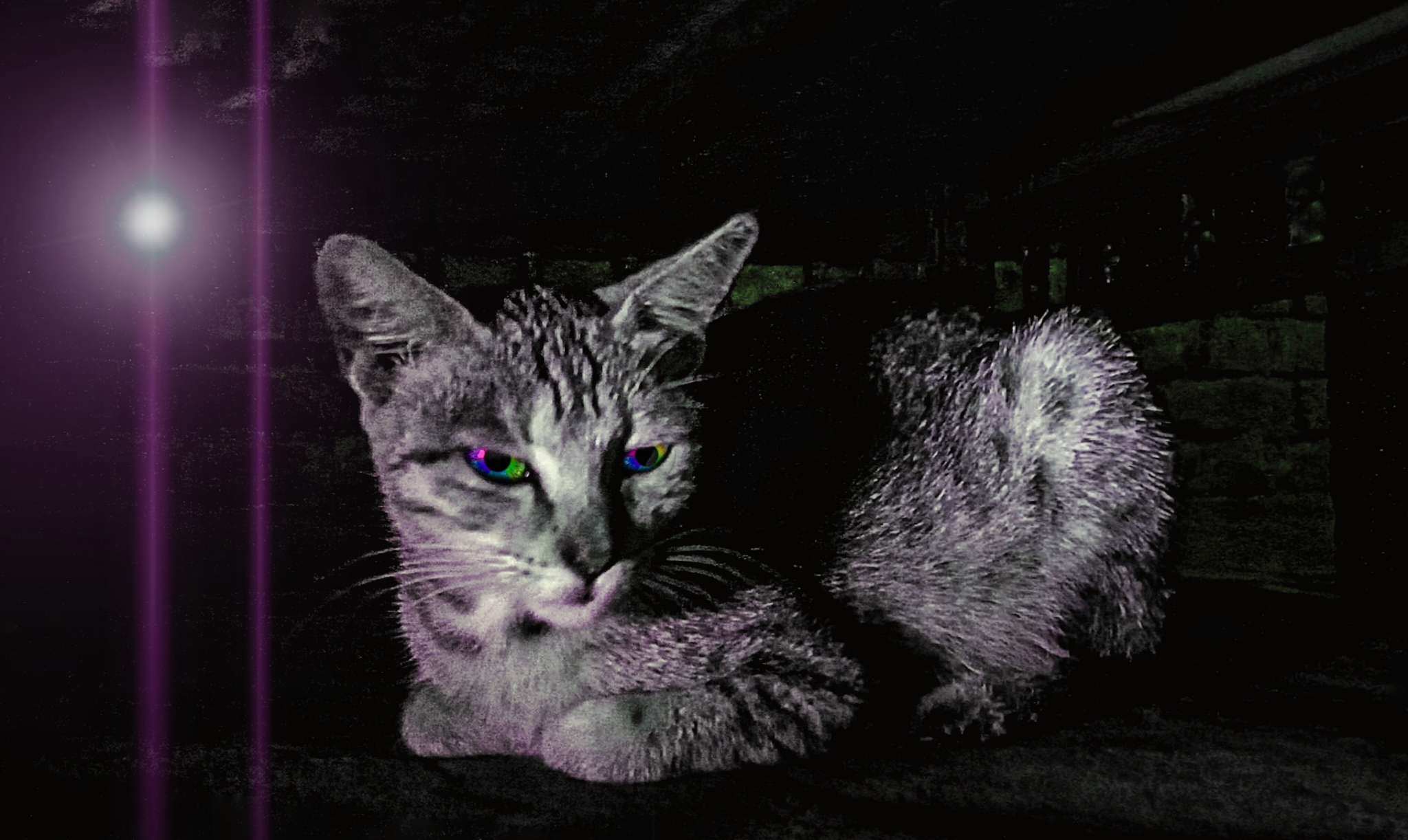 Cat at night time