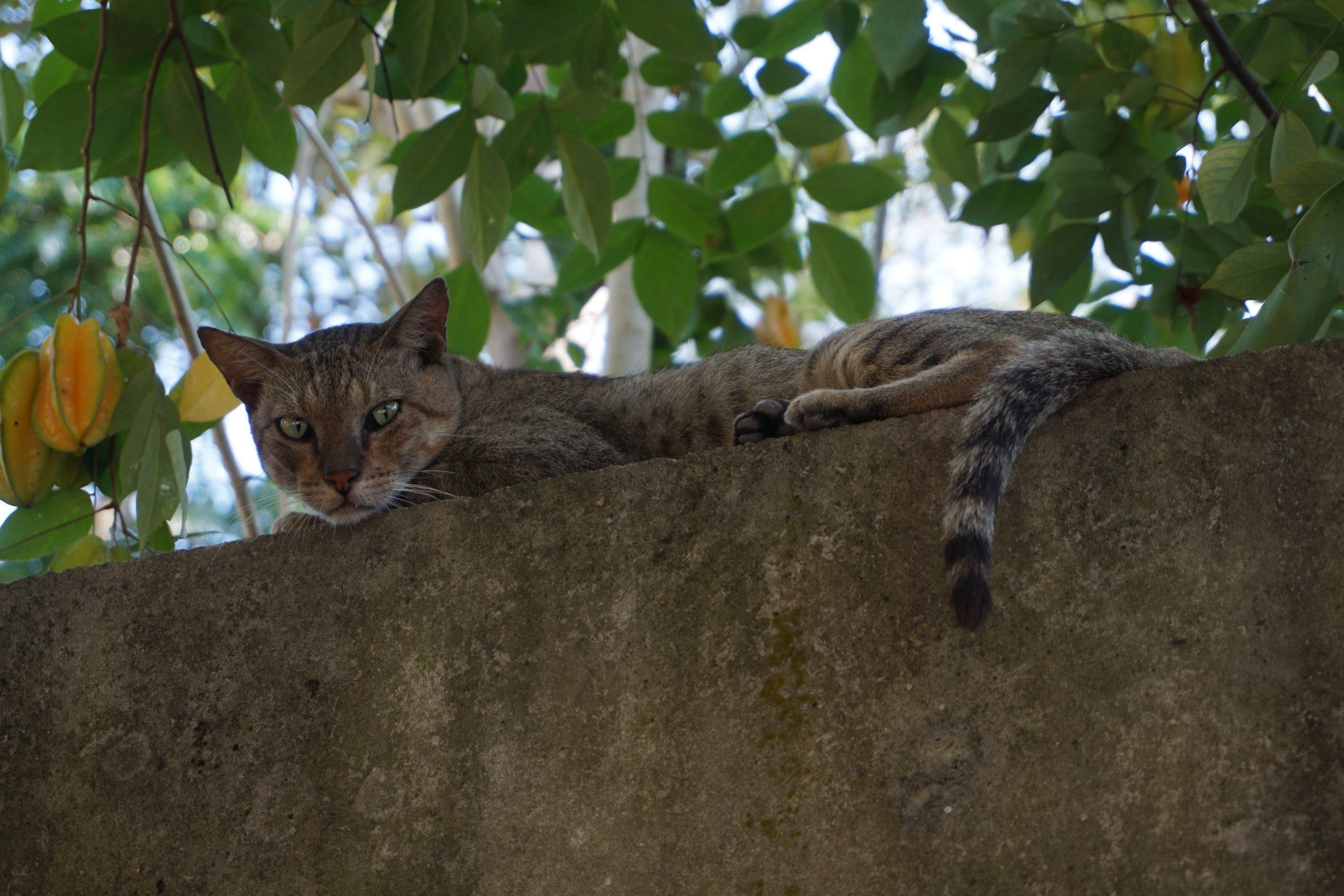 cat on walll