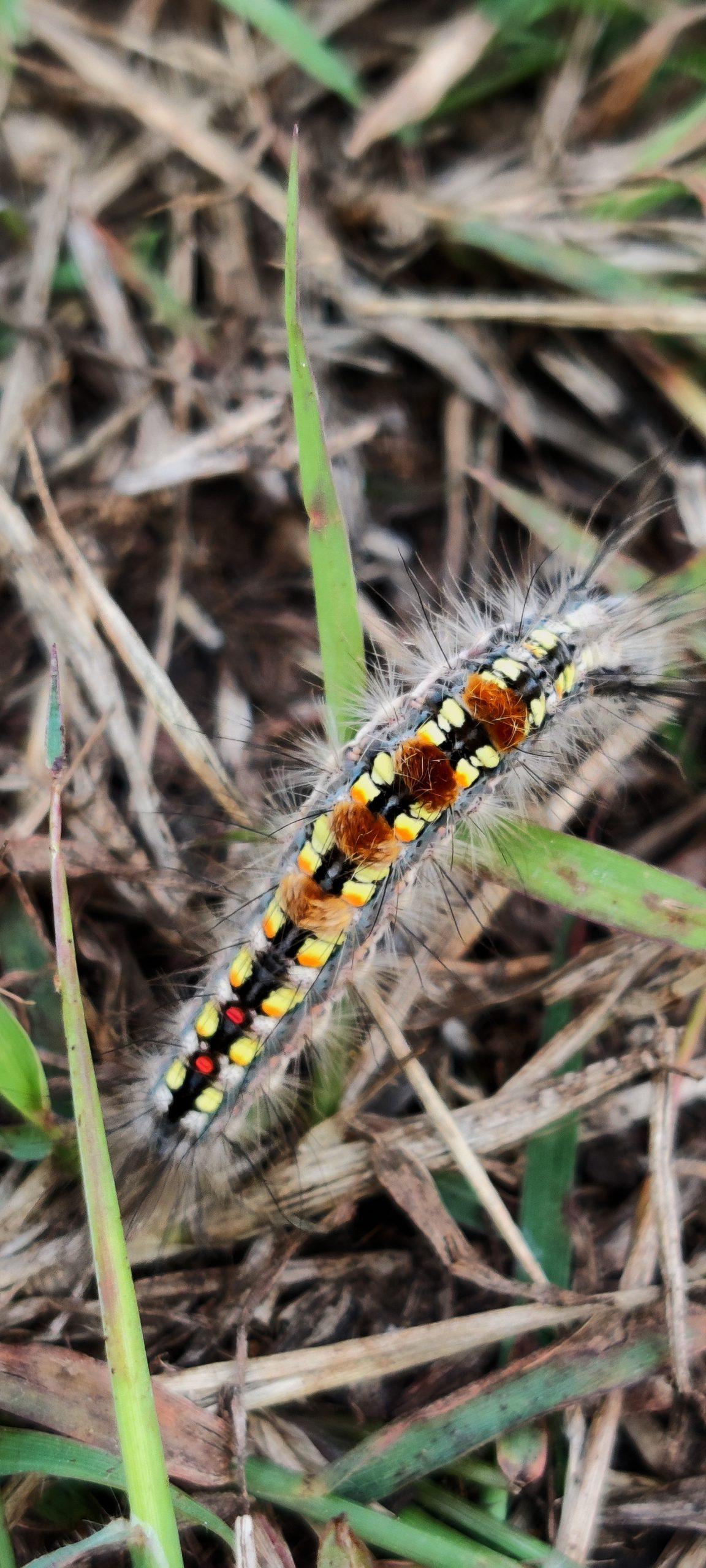 Caterpillar on grass