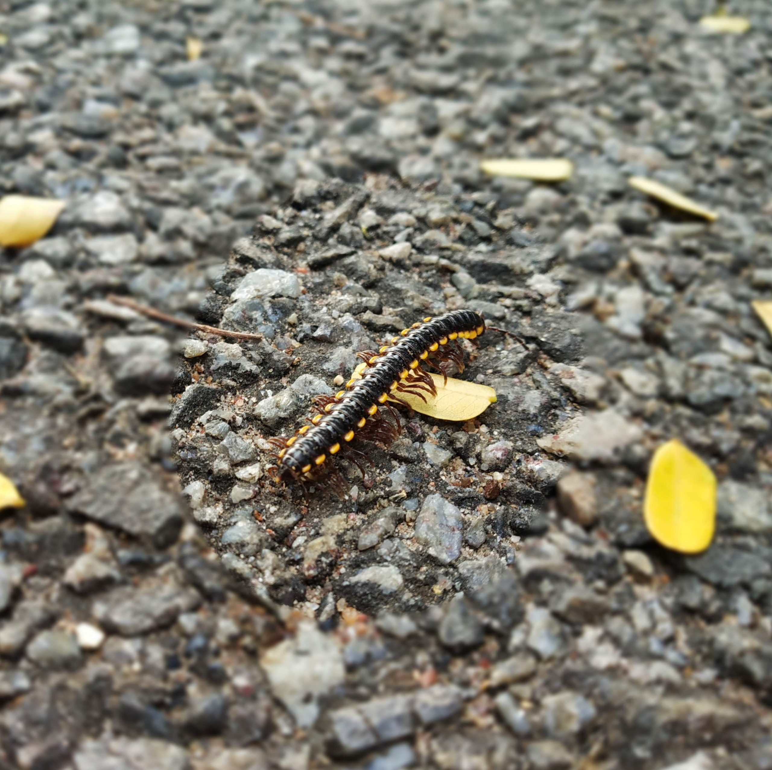 Centipede walking on the ground