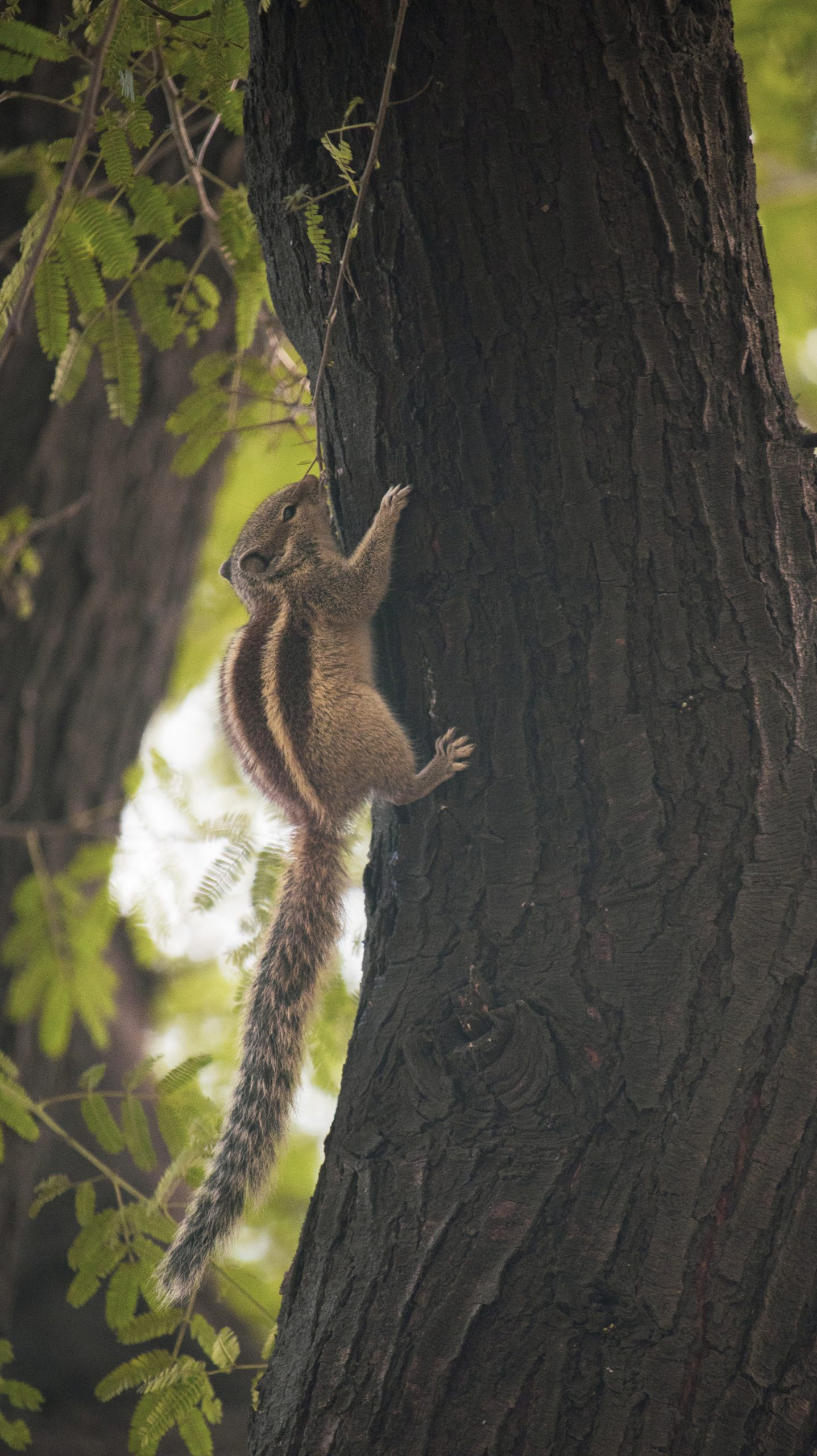 Squirrel climbing on a trunk