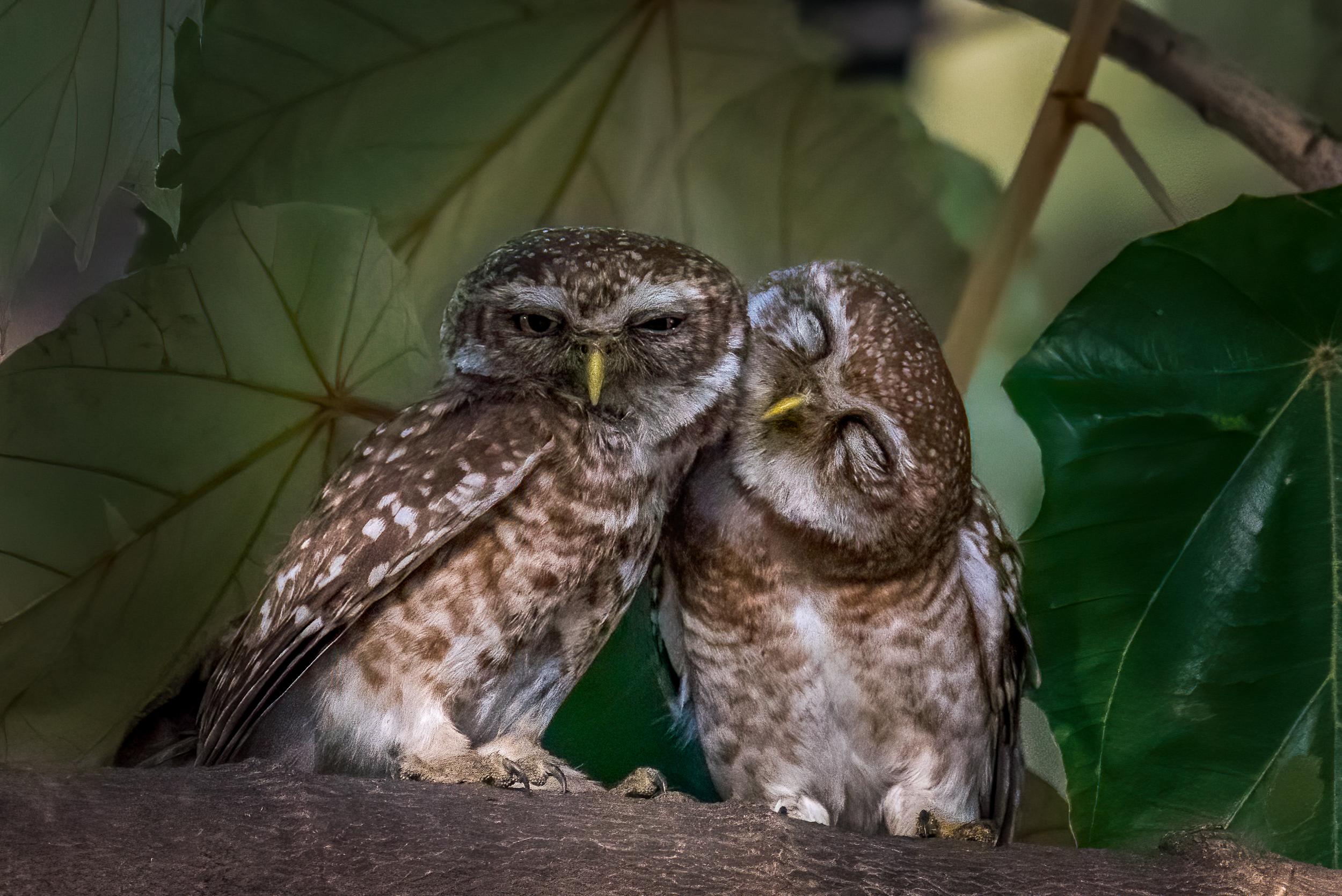 Owls sitting on tree