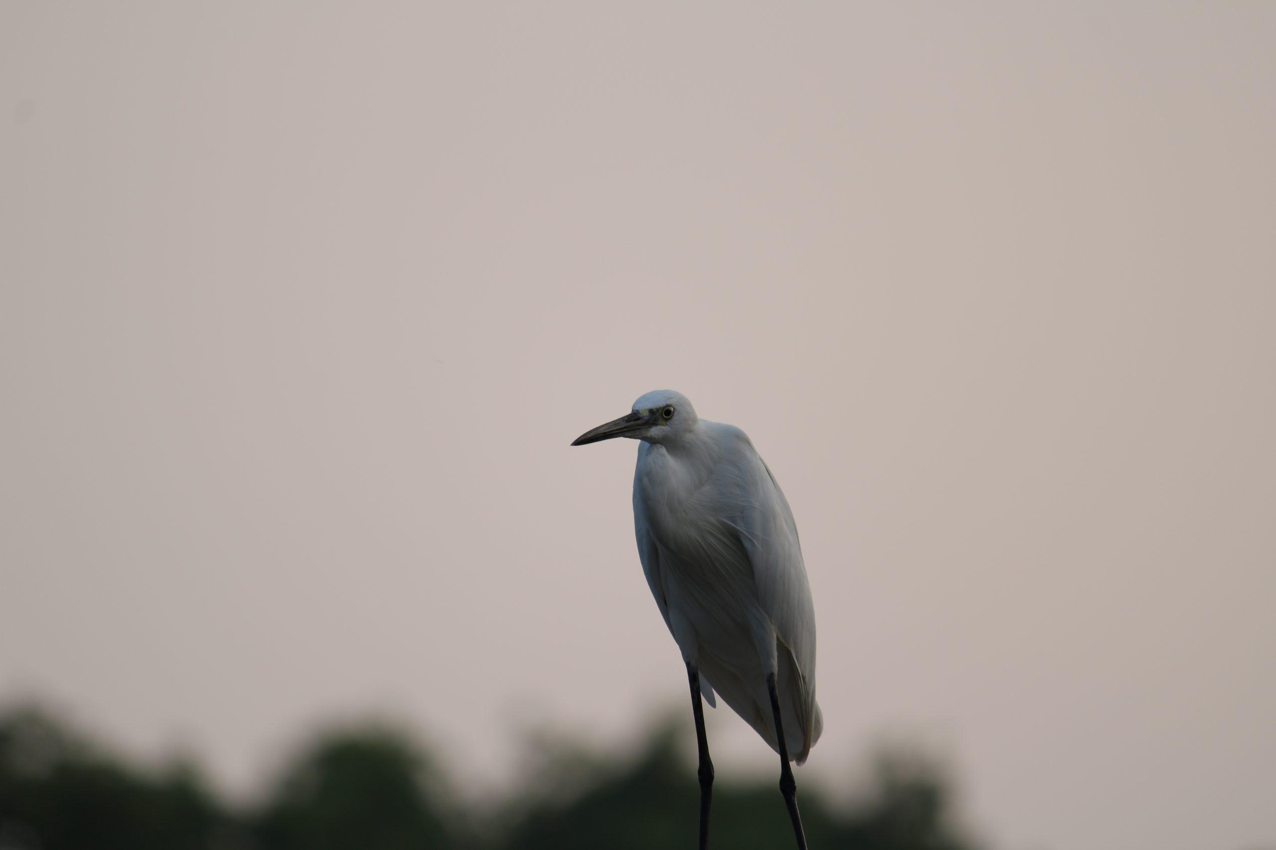Crane bird macro view